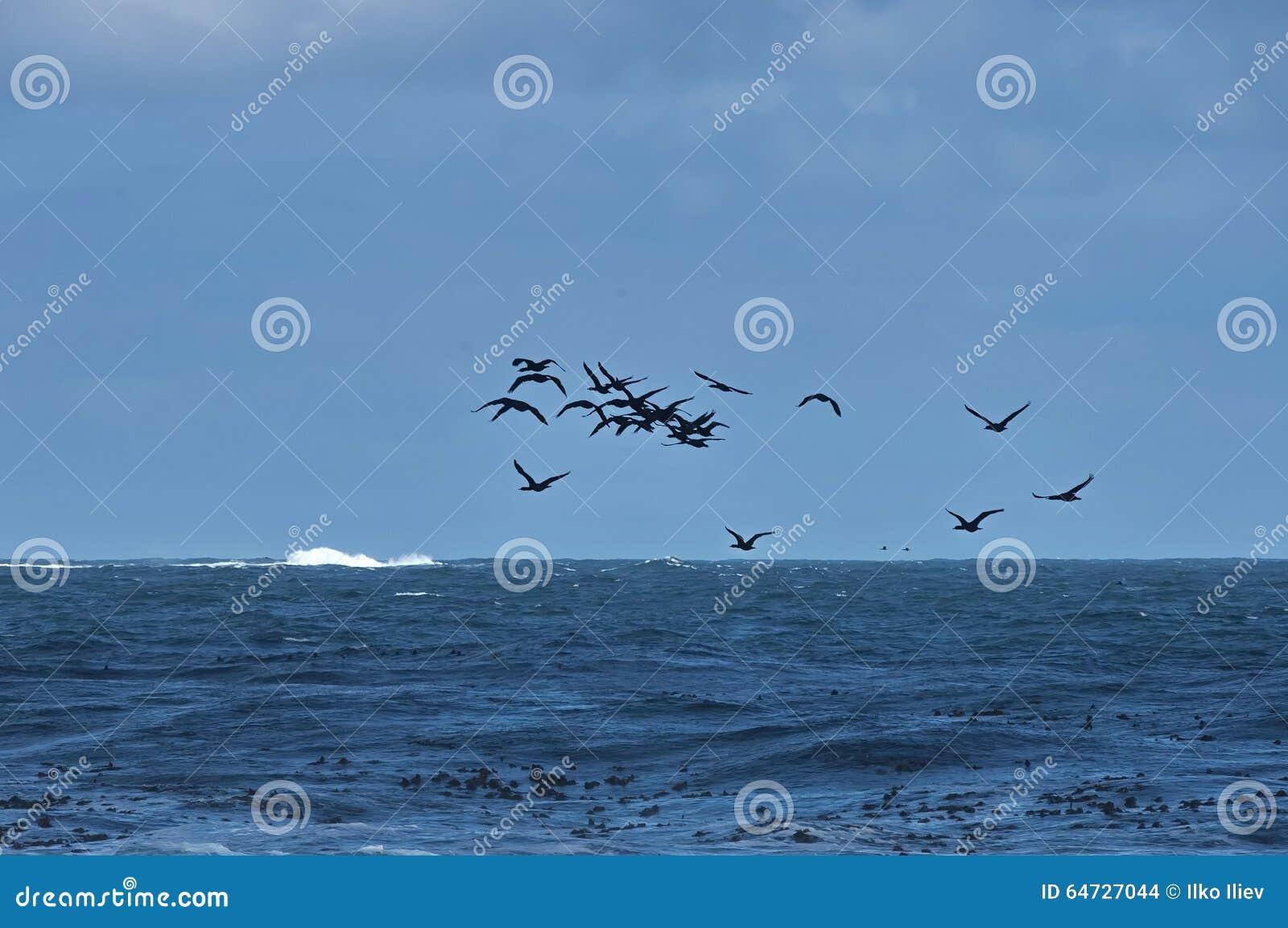 Linea costiera dell Oceano Atlantico dal Capo di Buona Speranza Volo dei cormorantocks del capo