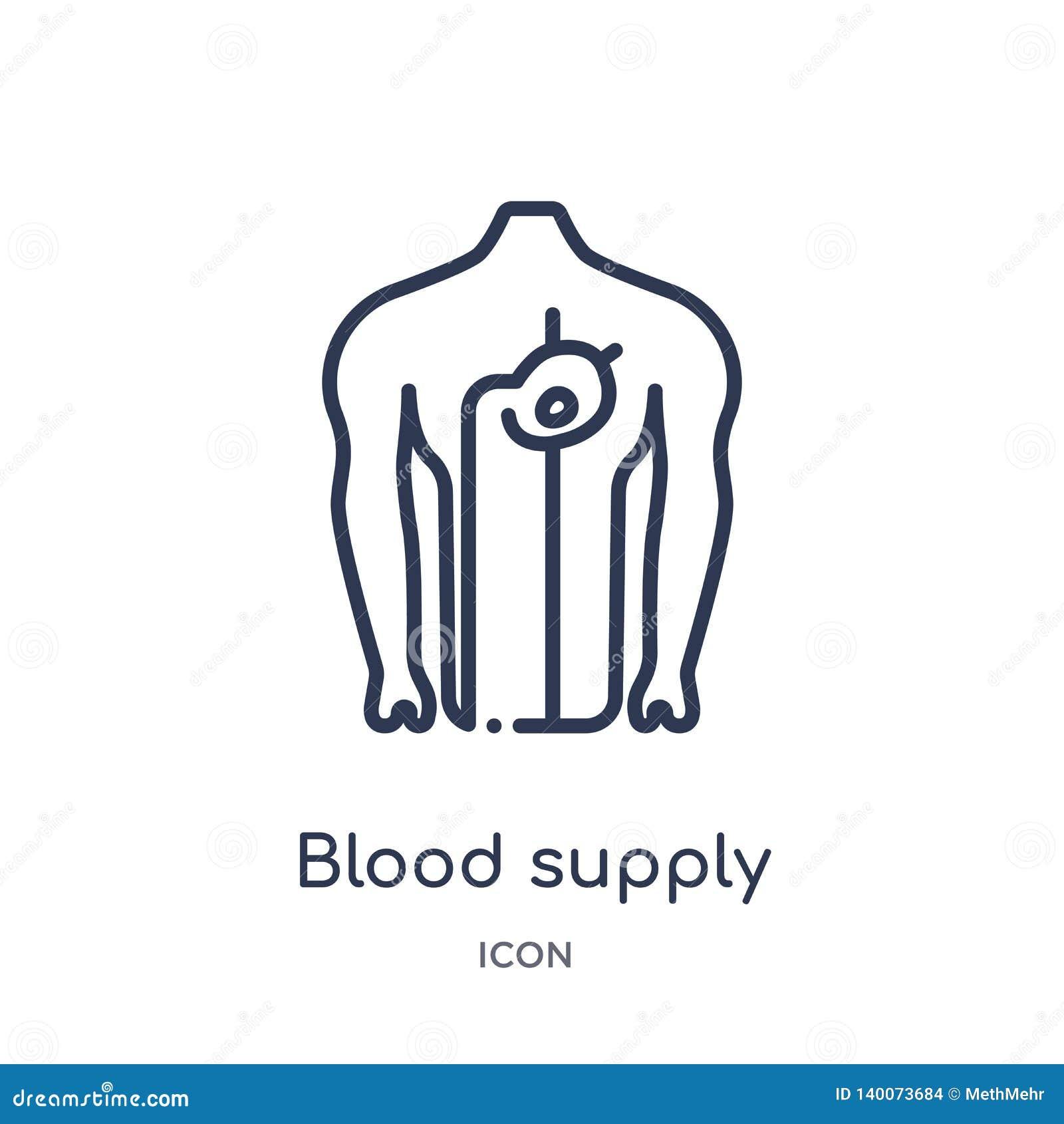 Lineair het systeempictogram van de bloedlevering van de Menselijke inzameling van het lichaamsdelenoverzicht Het dunne die picto