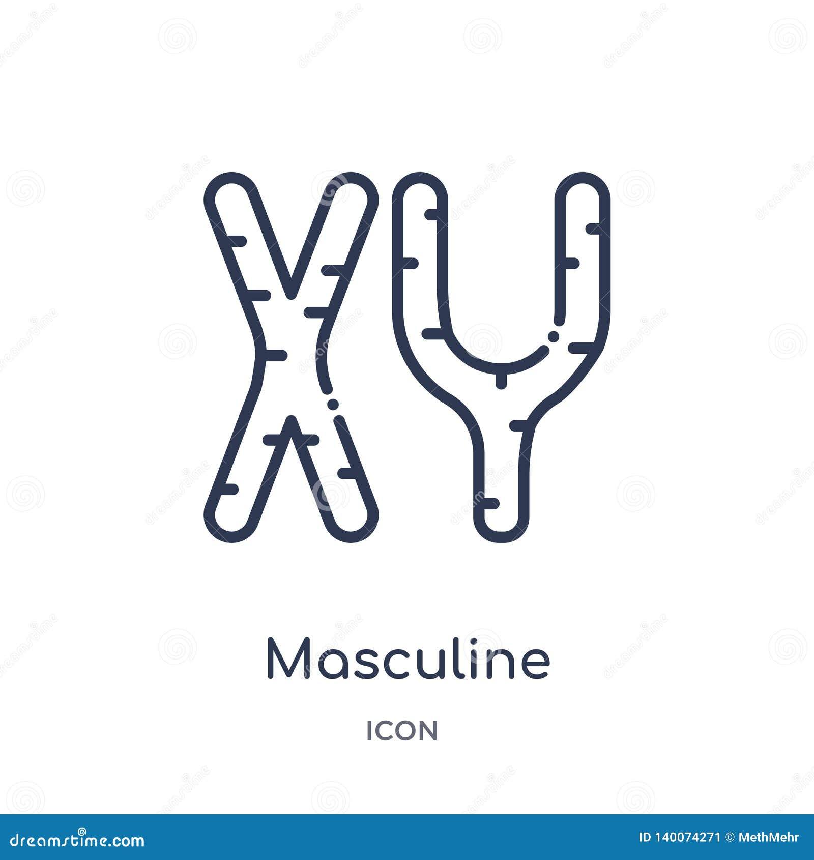Lineair mannelijk chromosomenpictogram van de Menselijke inzameling van het lichaamsdelenoverzicht Het dunne pictogram van lijn m