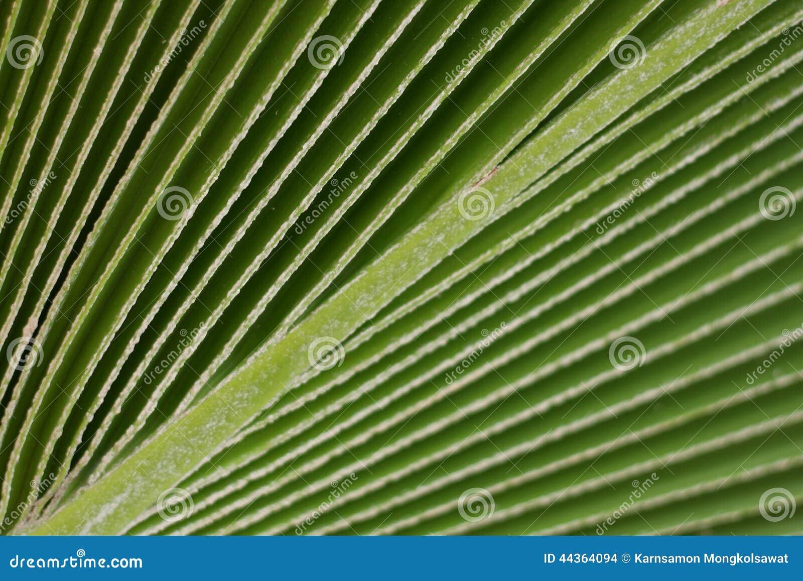 Linee e struttura di foglia di palma verde