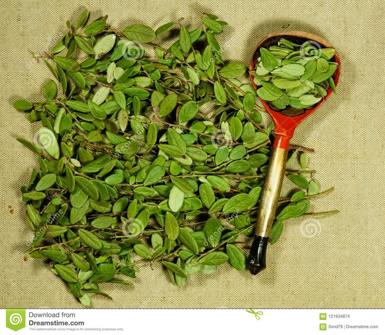 Lingonberry leaves: application in traditional medicine 10