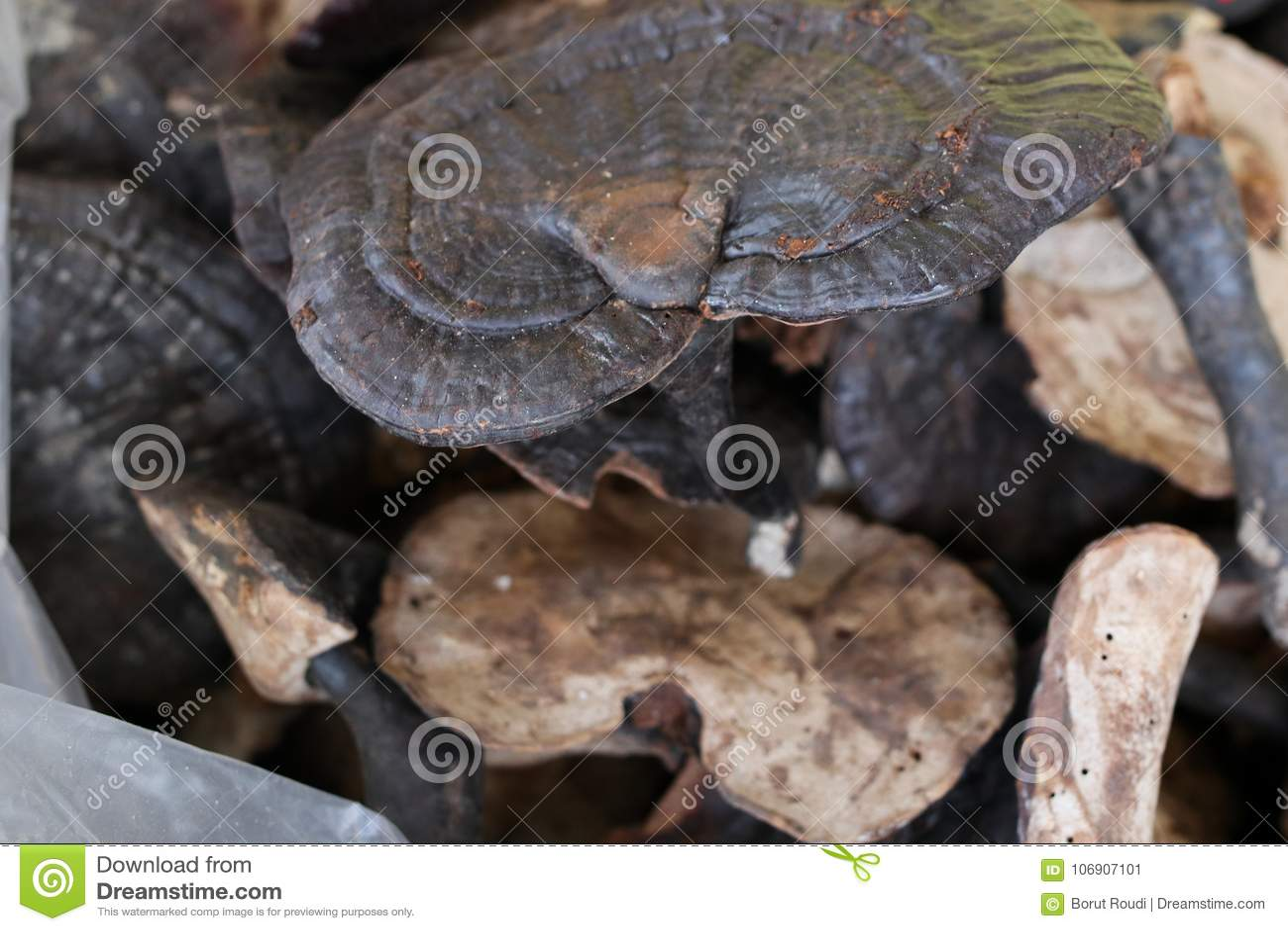 Lingzhi pieczarki cięcia ganoderma suchy lucidum