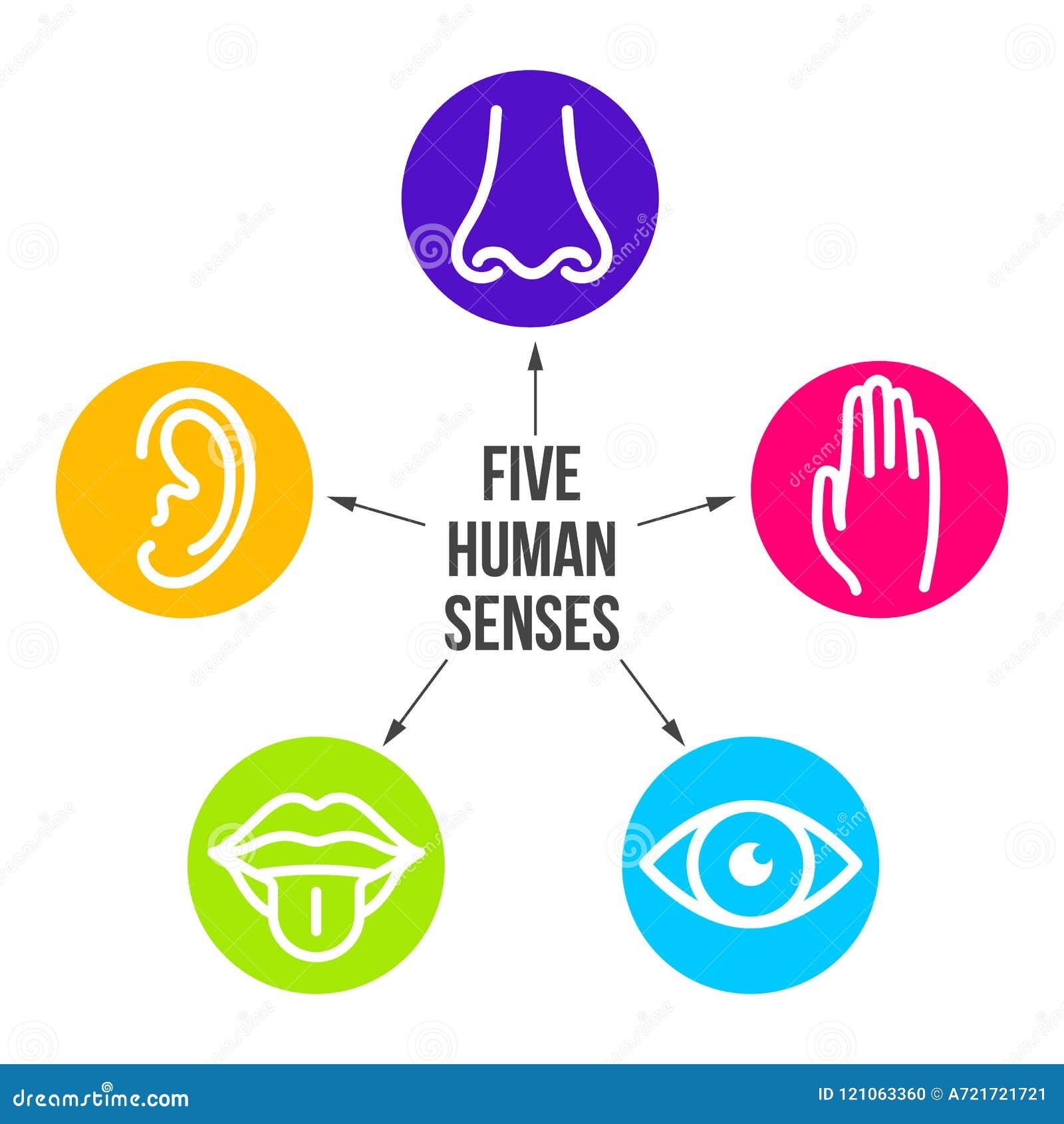 Linha criativa grupo da ilustração do vetor do ícone de cinco sentidos humanos Visão, audição, cheiro, toque, gosto isolado sobre