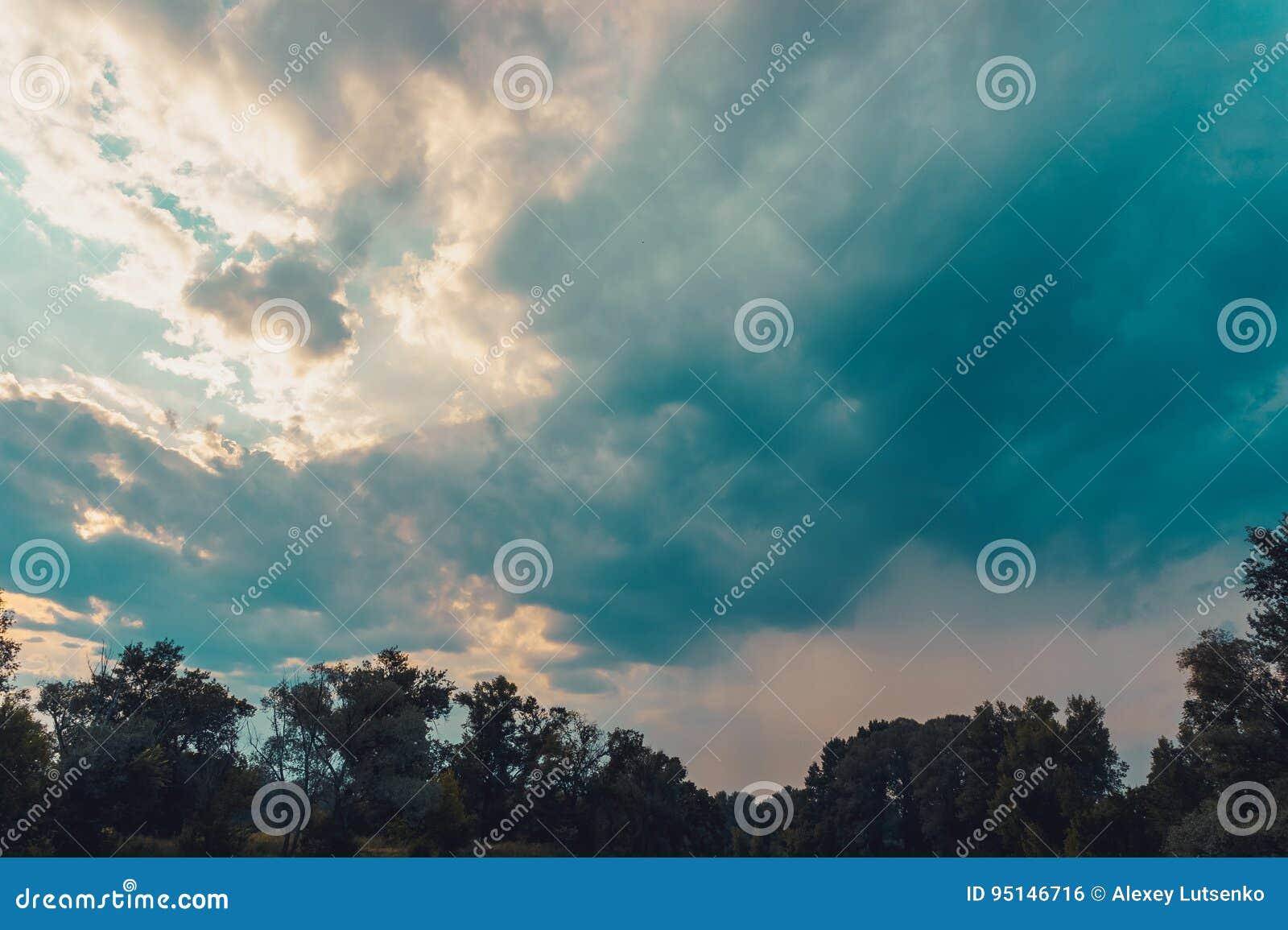 Linha superior das árvores verdes sobre o céu