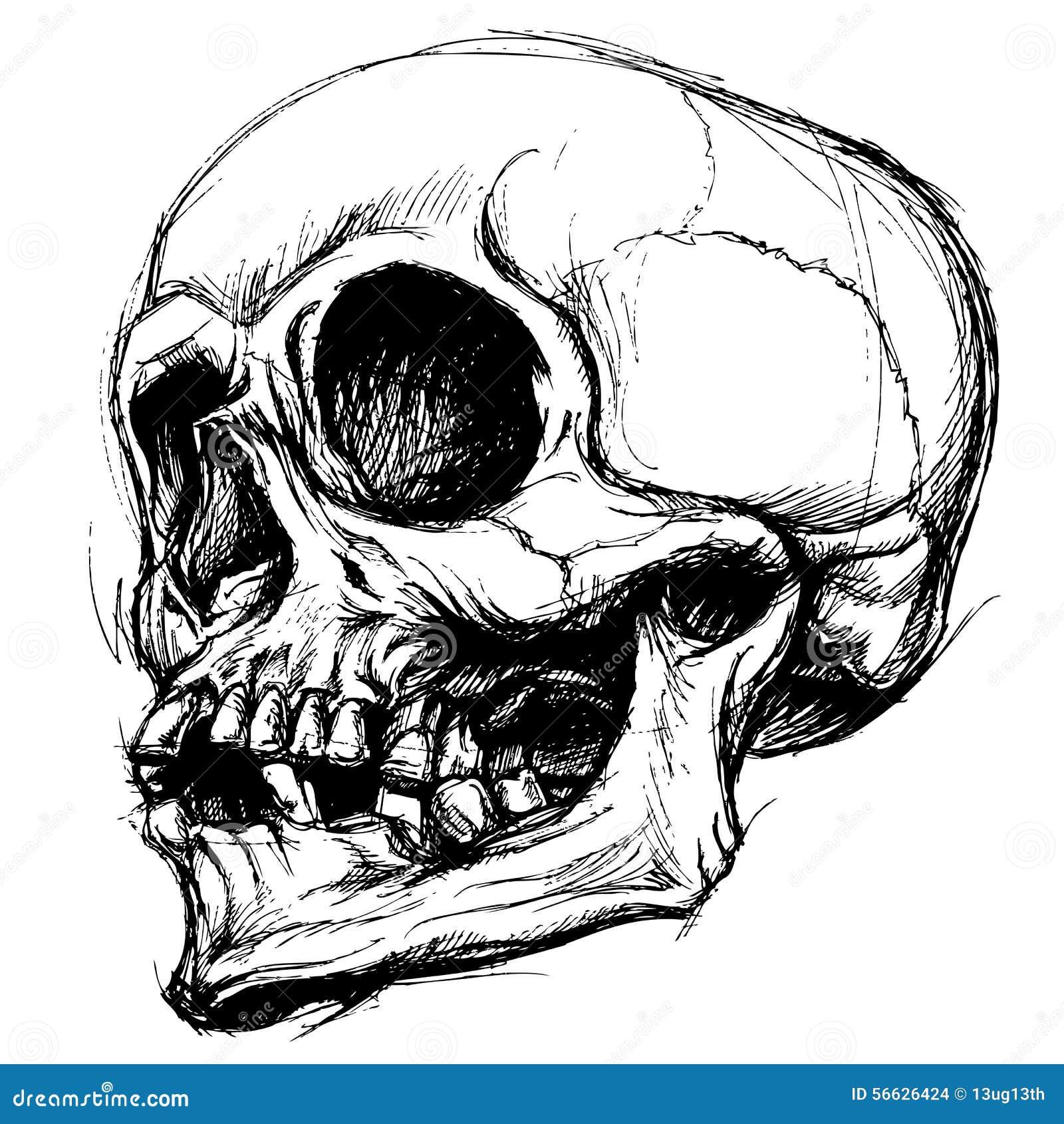 Linha vetor do desenho do crânio do trabalho