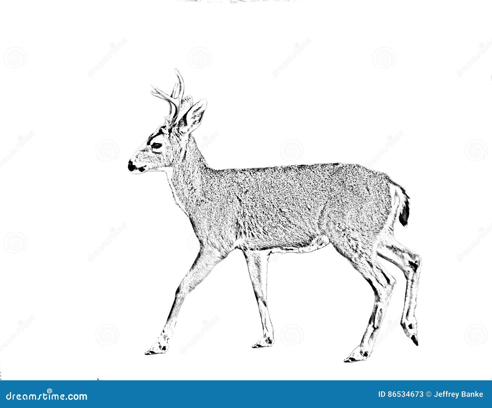 Linje konstbehandling av entailed hjort
