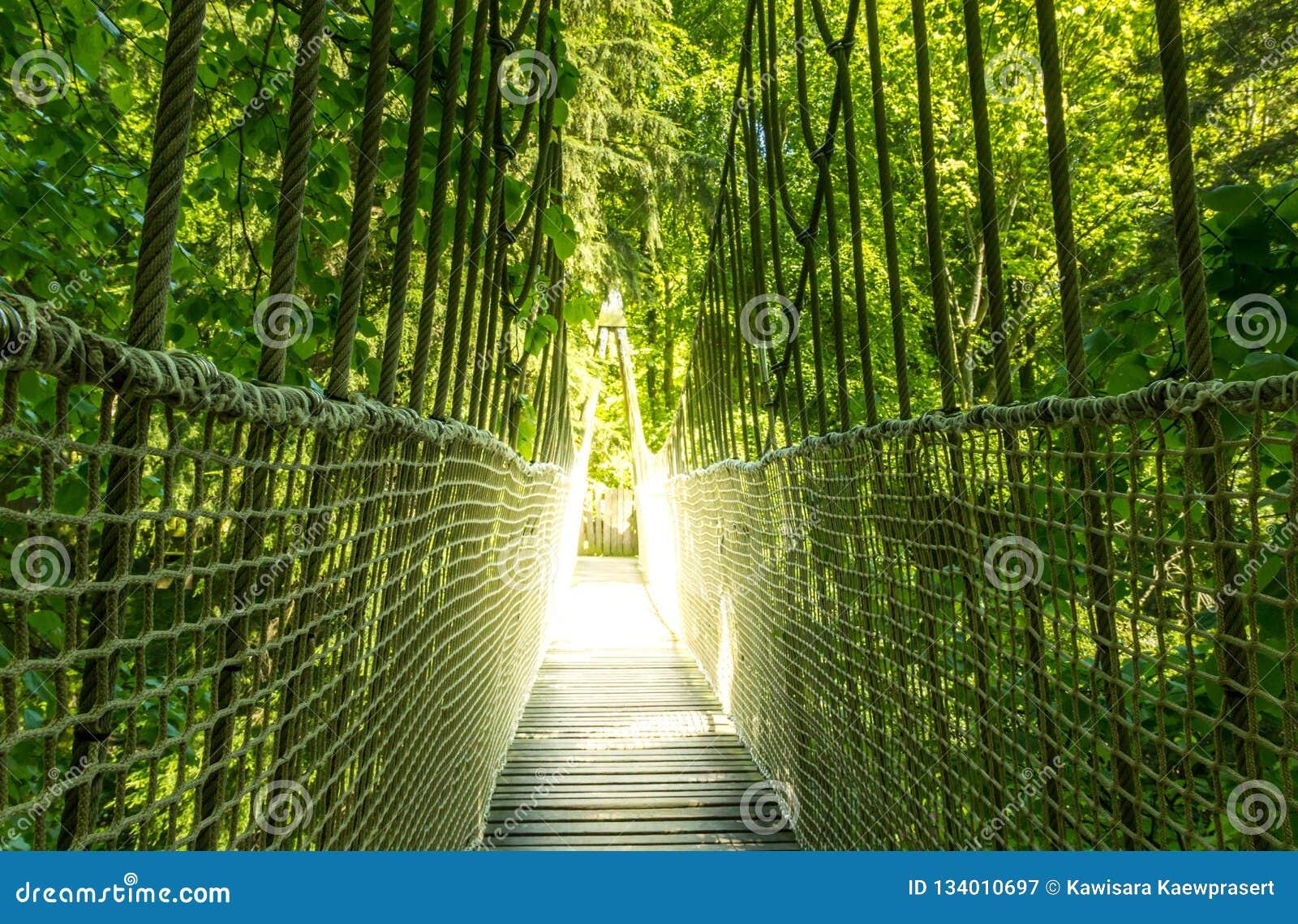 Linowy zawieszenie most