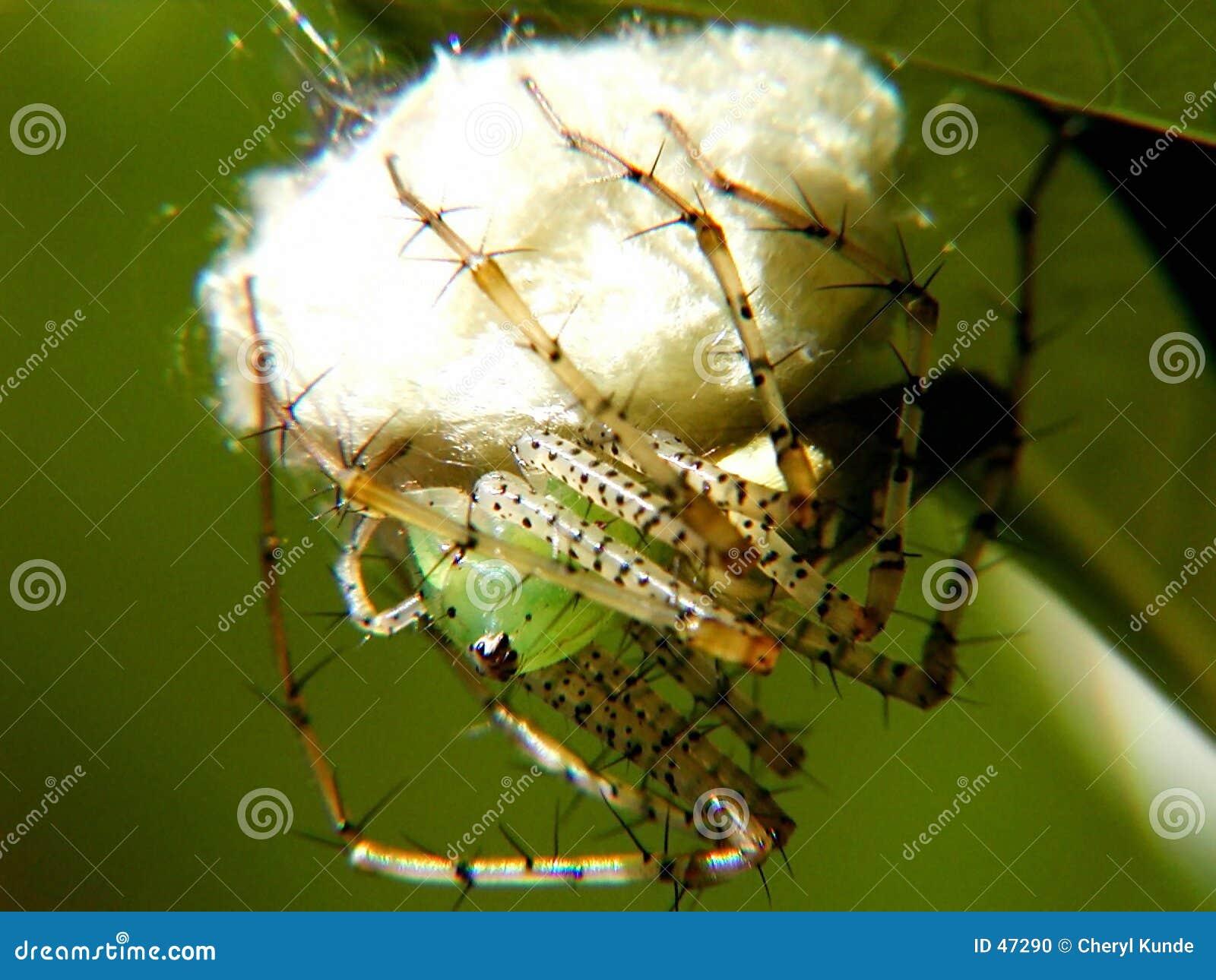 Linx αράχνη