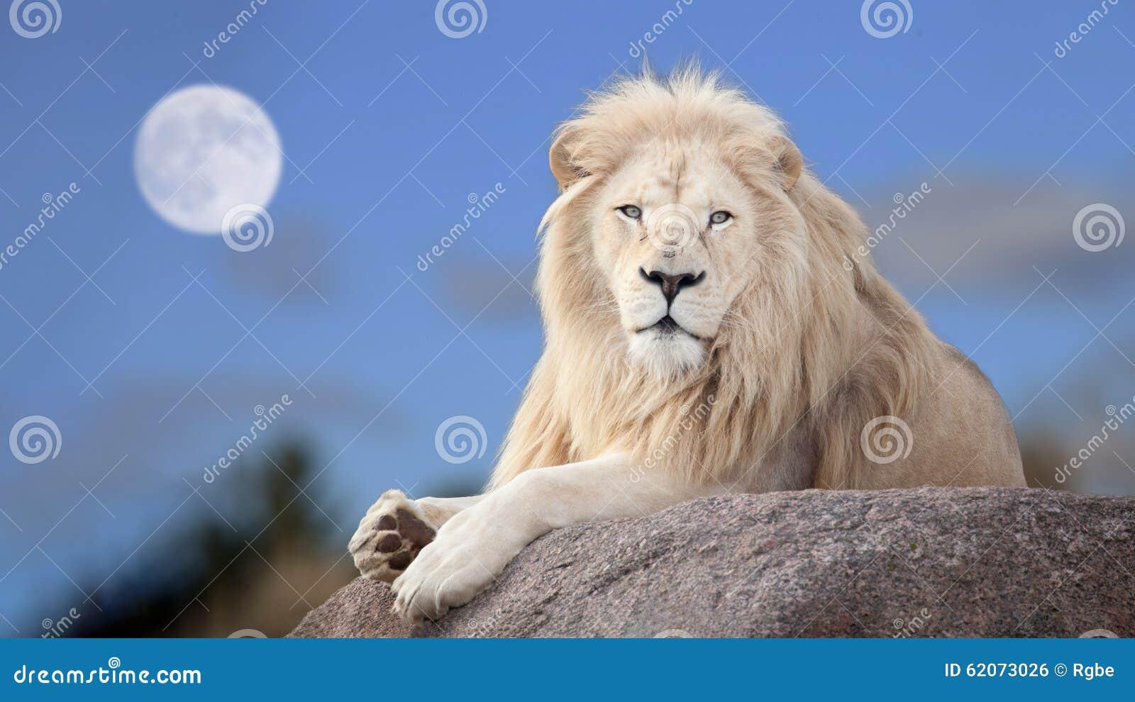 Lion blanc photo stock image du lion blur chasseur - Photos de lions gratuites ...