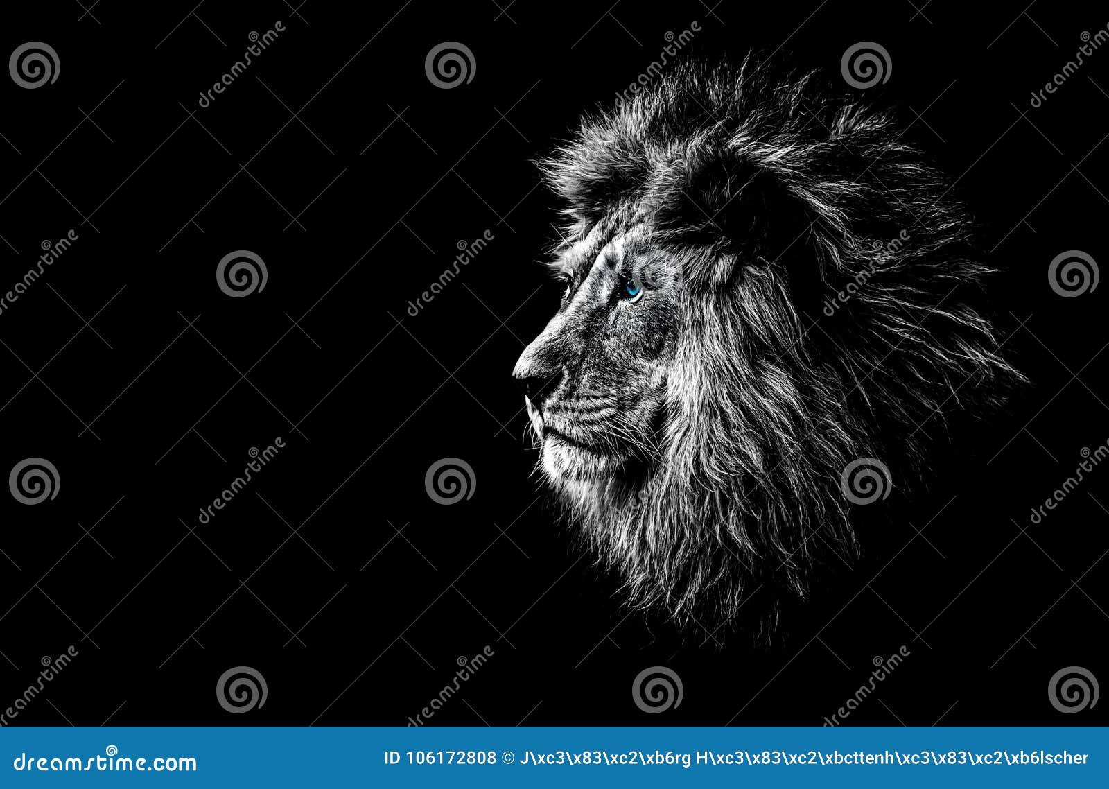 lion en noir et blanc photo stock image du affiche. Black Bedroom Furniture Sets. Home Design Ideas