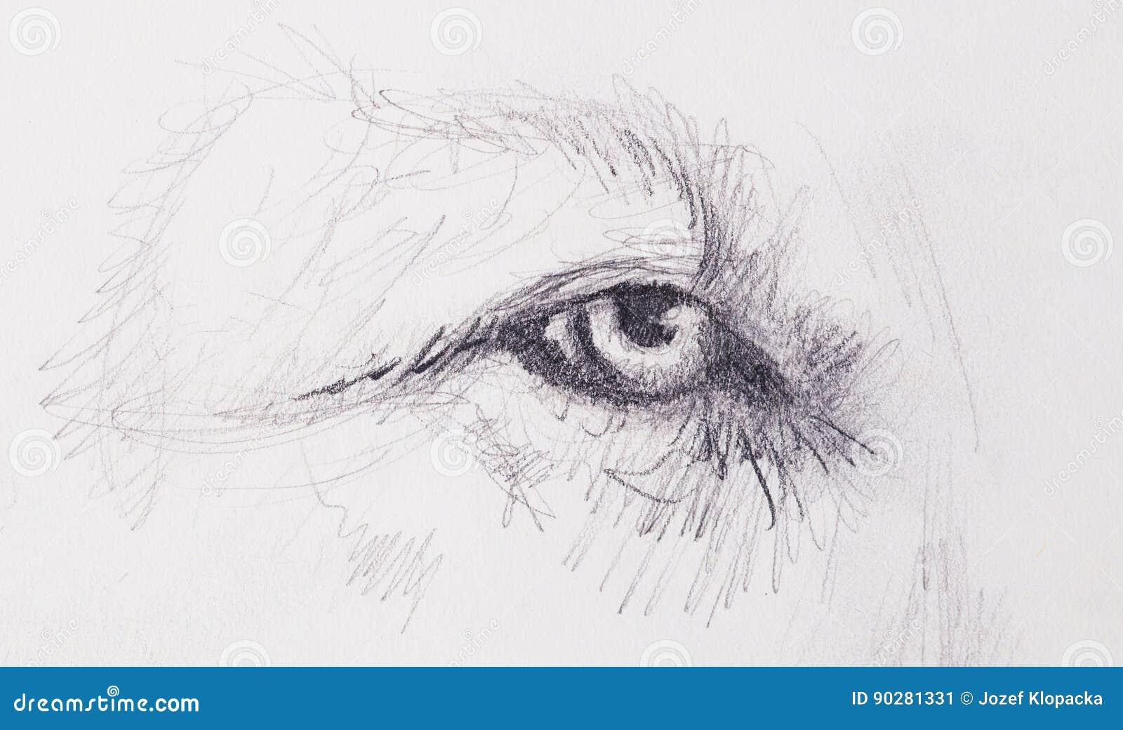 Lion Eye Animal Drawing On Vintage Paper Stock Illustration