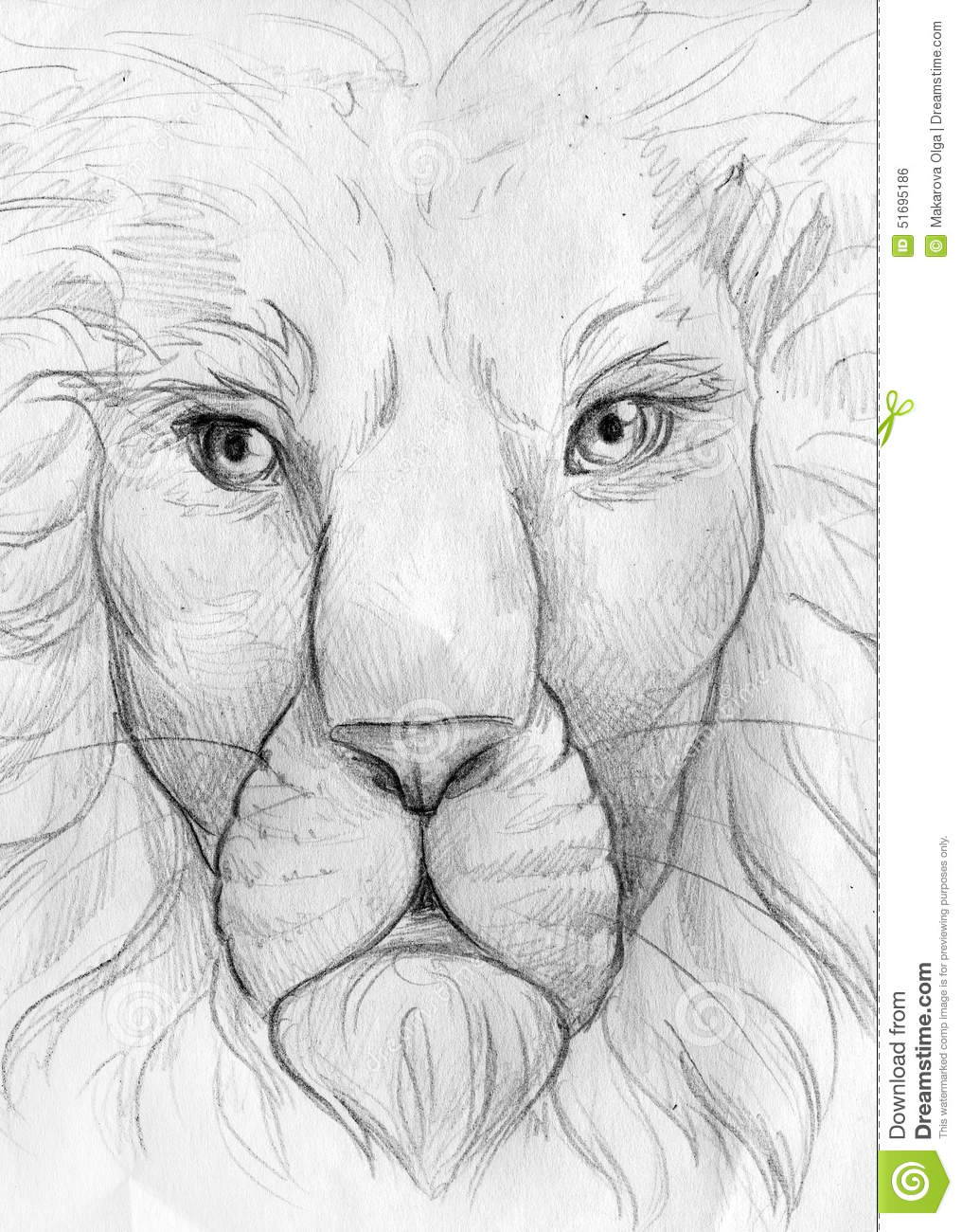 Hand drawn pencil sketch of an old wise lion king of the beasts