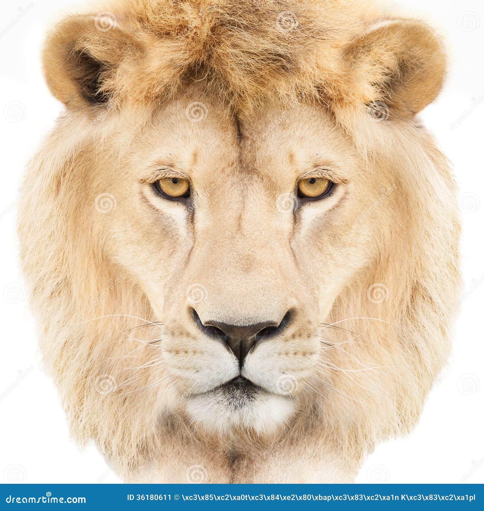 White lion face images - photo#10