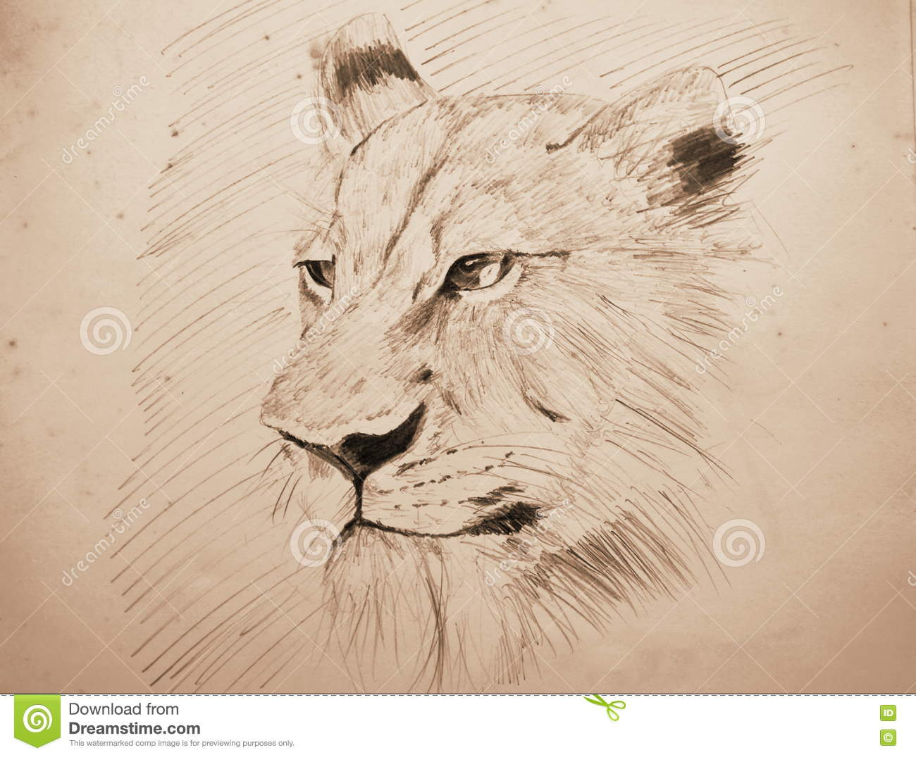 Lion face portrait pencil sketching on old paper with sepia tone