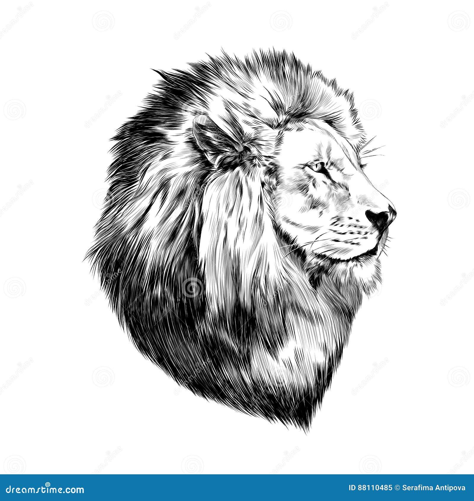 Lion Fier Visage Dans Le Profil Illustration De Vecteur