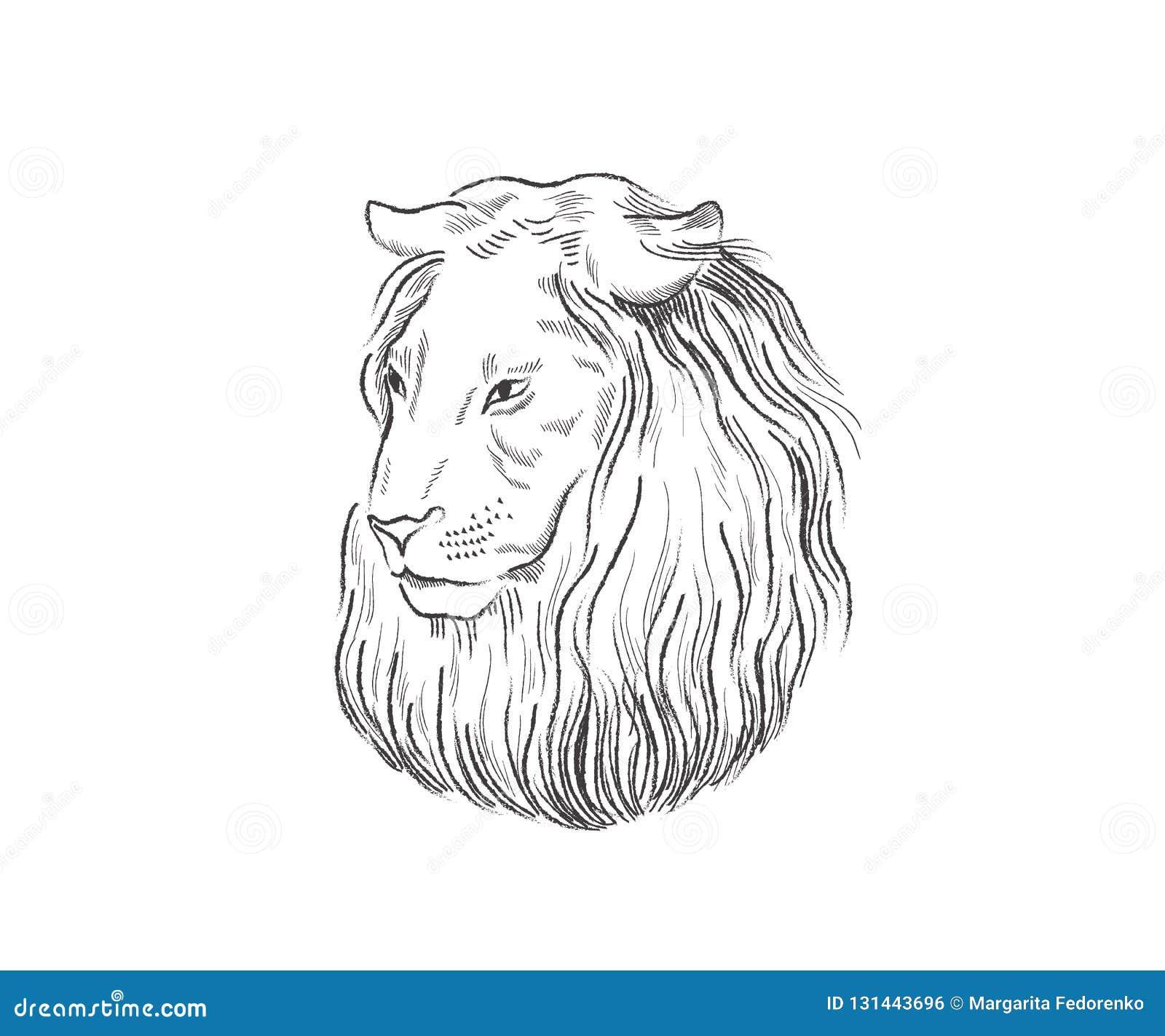 Lion Fier Visage Dans Le Profil Examinant La Distance