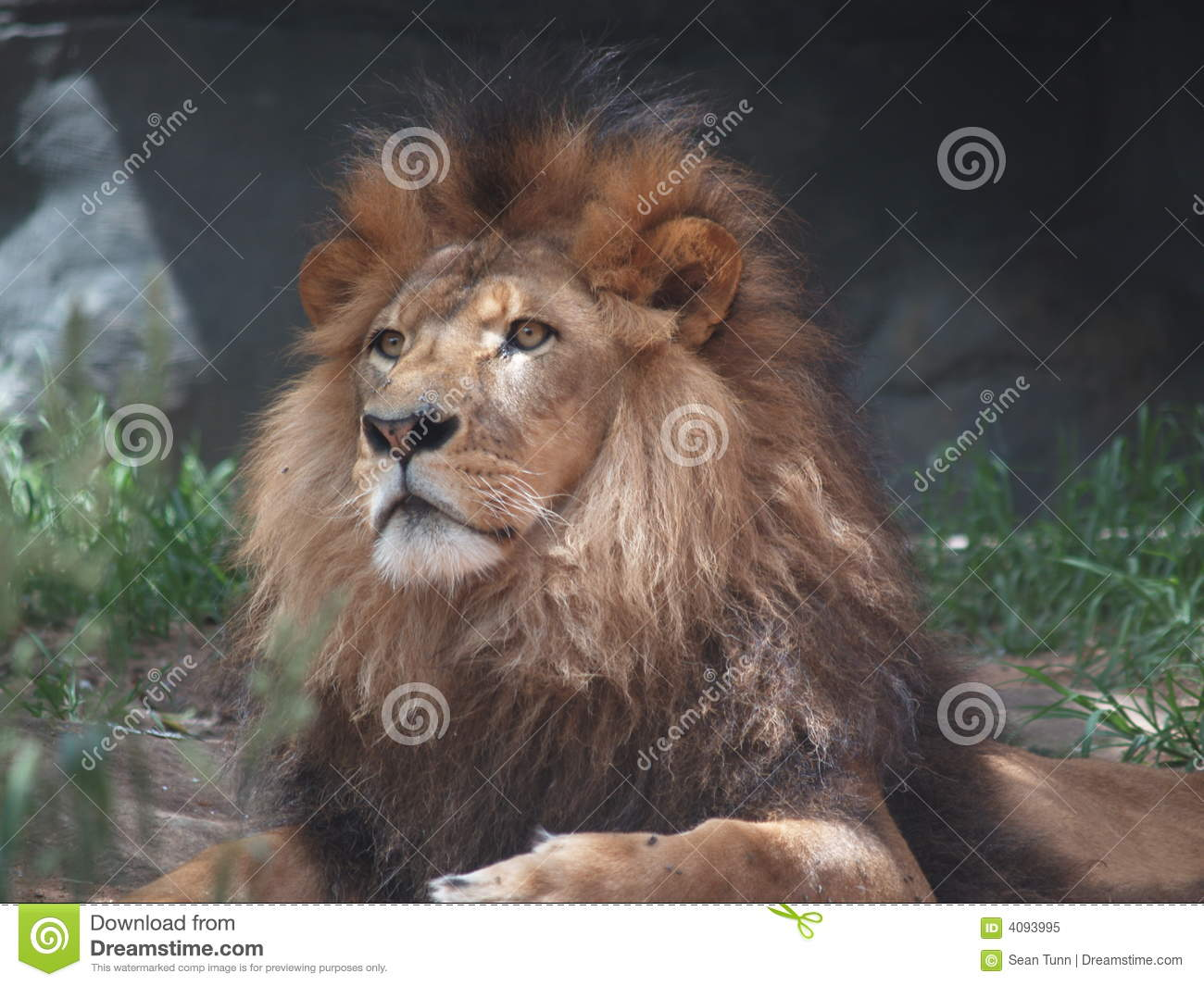 Balloons Clipart Lion - The King ...