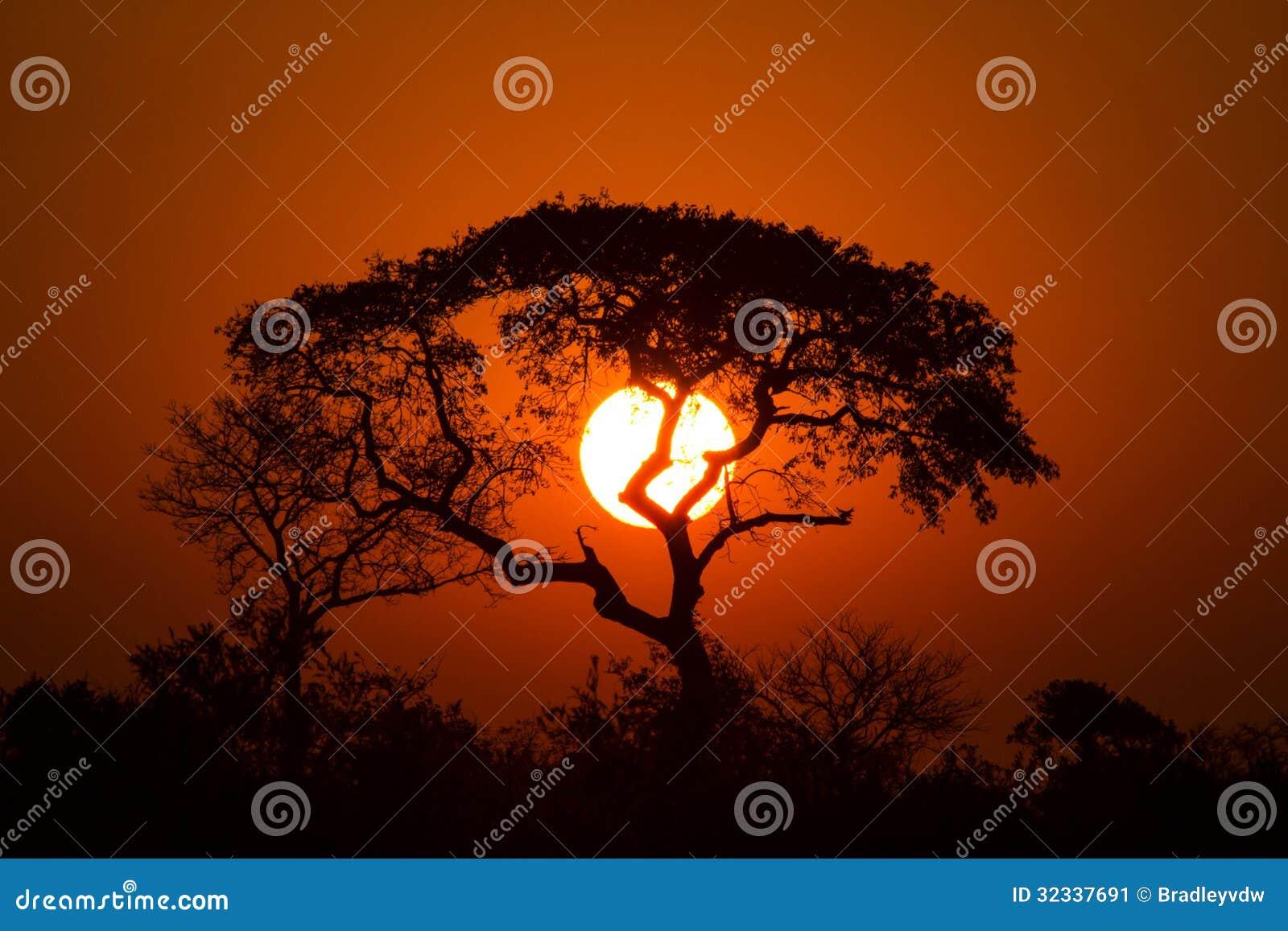 Lion King Sunset Stock Image Image 32337691