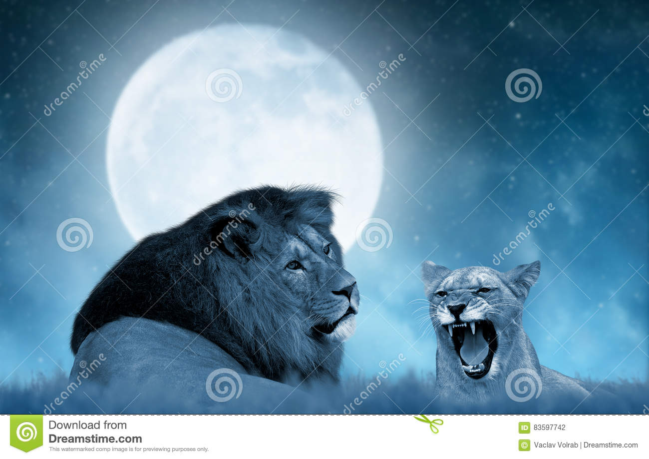 Lion and lioness on the savannah