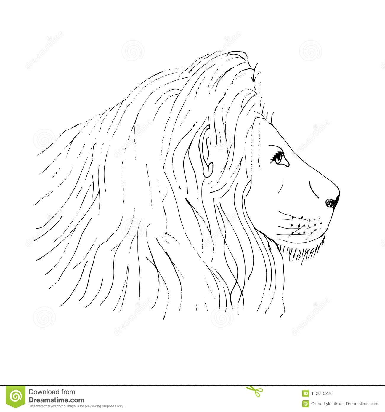 lion male head ink hand drawn sketch on white background stock