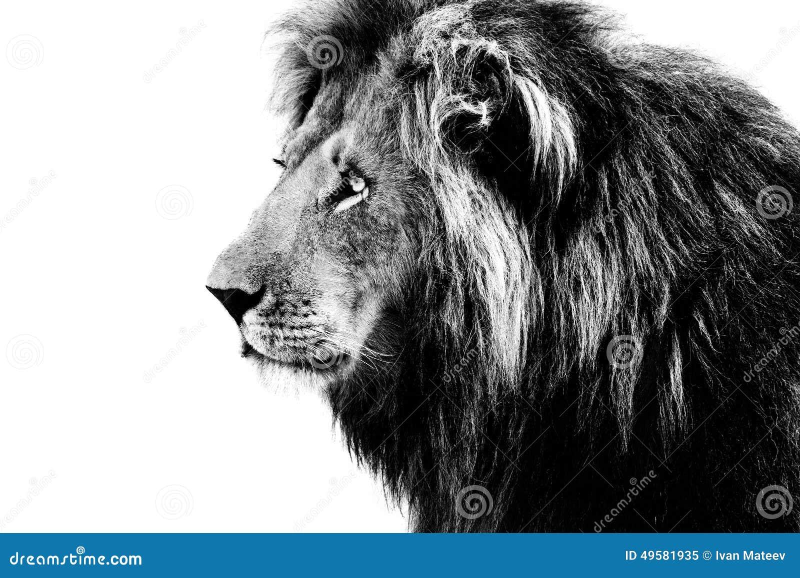 lion noir et blanc image stock image du verticale noir. Black Bedroom Furniture Sets. Home Design Ideas