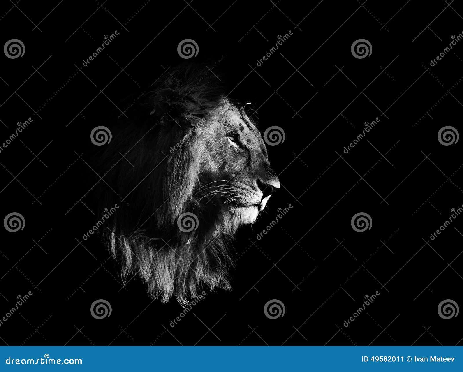 lion noir et blanc image stock image du animal noir. Black Bedroom Furniture Sets. Home Design Ideas
