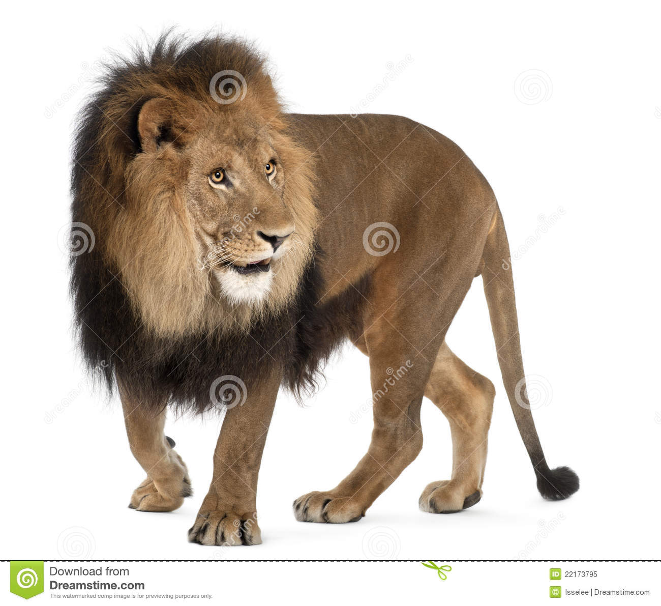 Majestic Lion Standing In The Grass Stock Photography - Image: 5651072