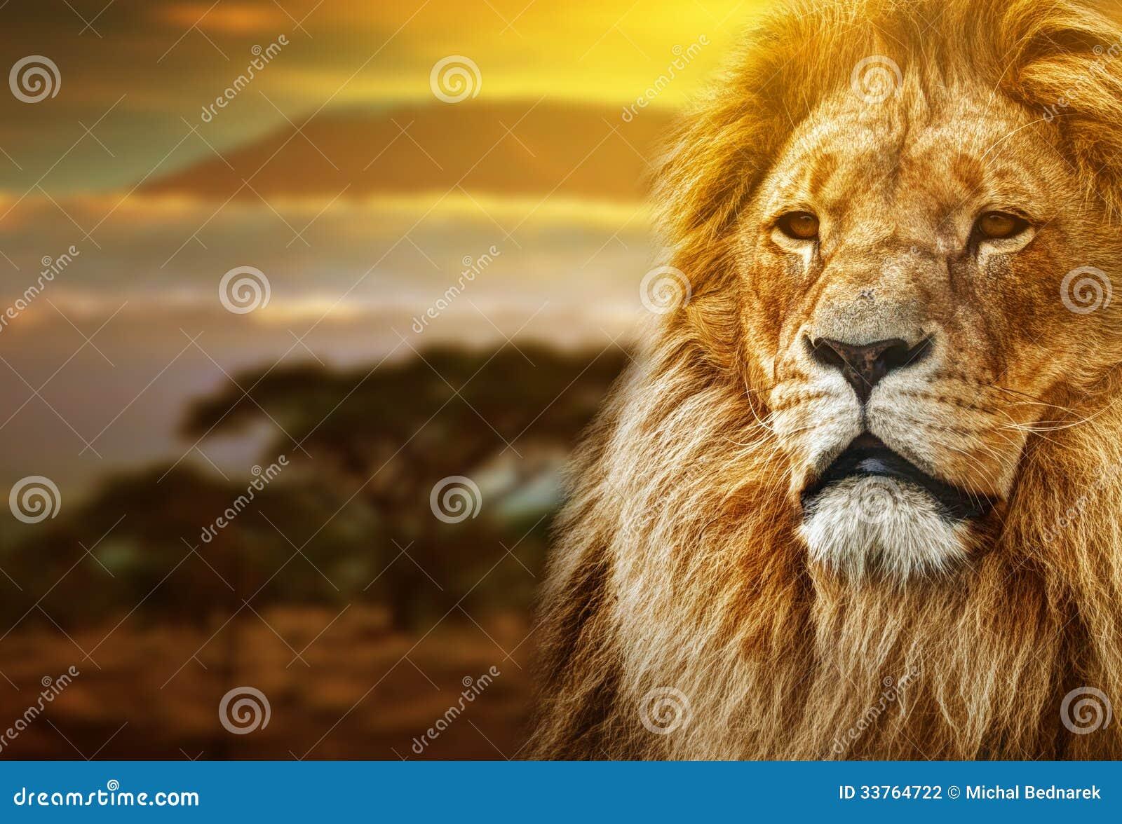 Lion portrait on savanna landscape
