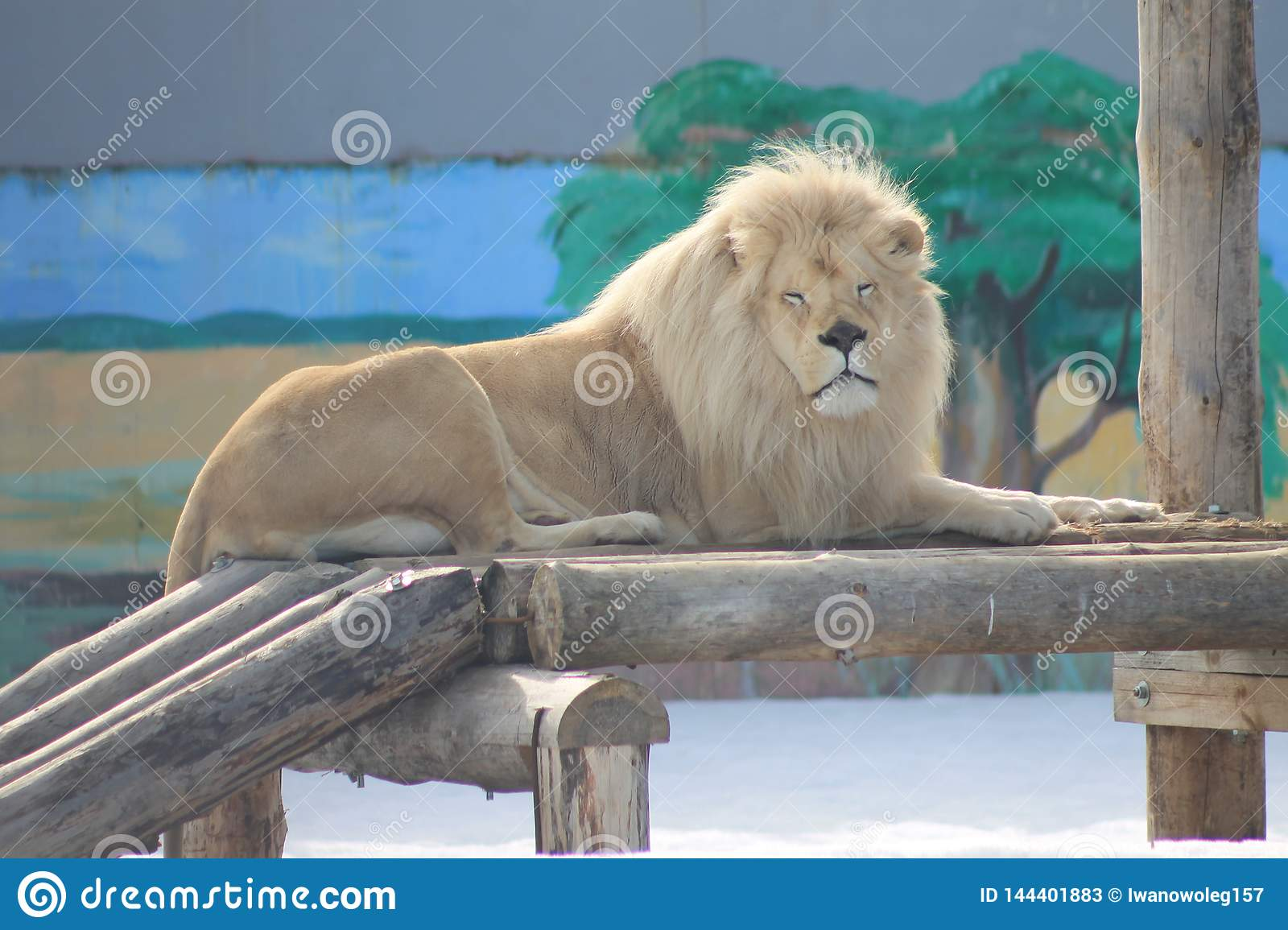 Lion, or rather leo, king of beasts.