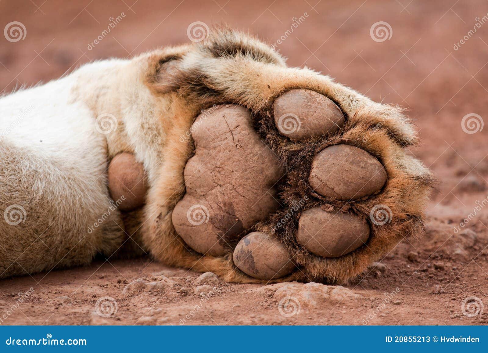 lions paw Lionspawnews.