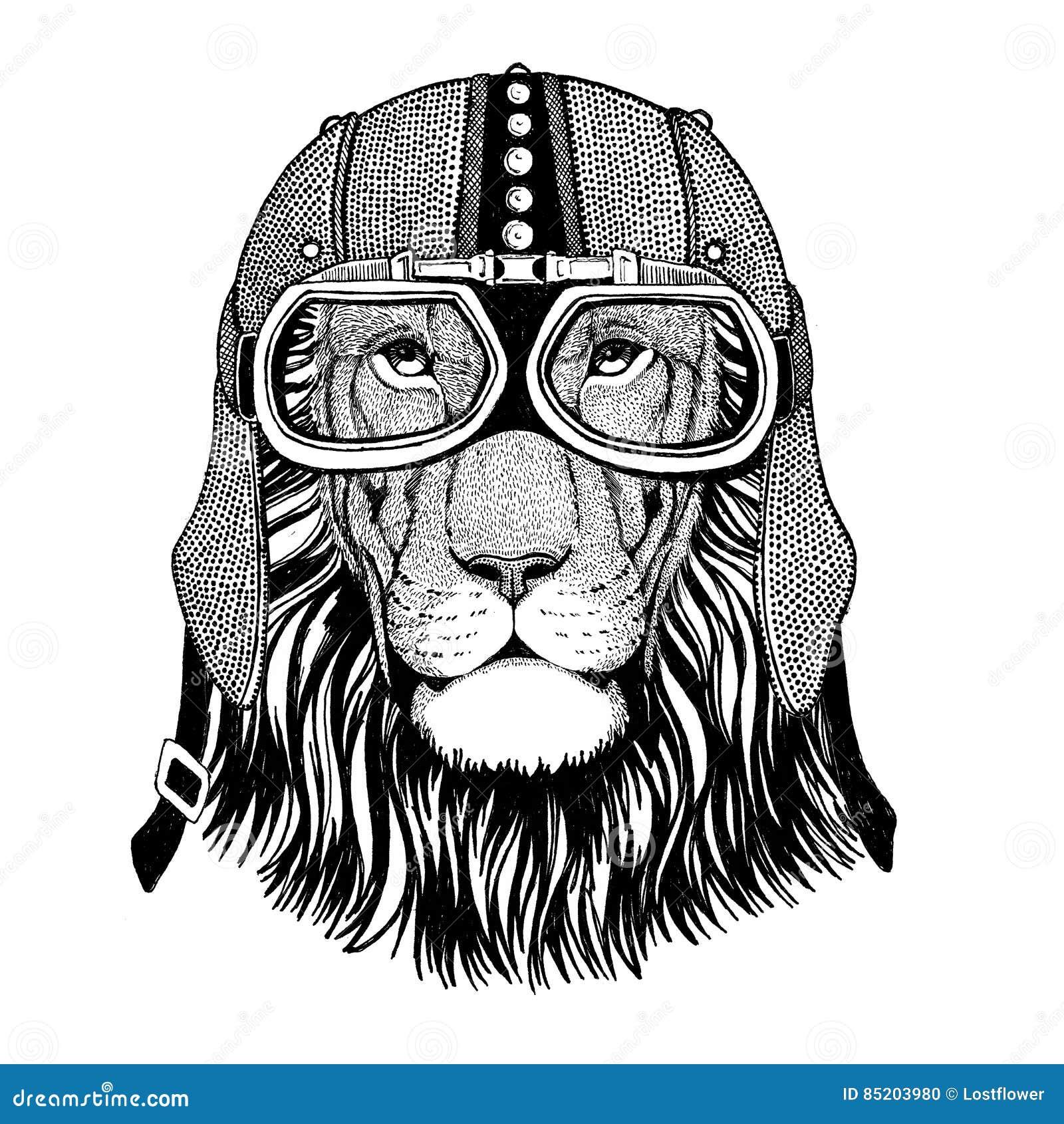 Lion Sauvage De Chat Sauvage Dans Le Casque De Moto Avec Des Verres