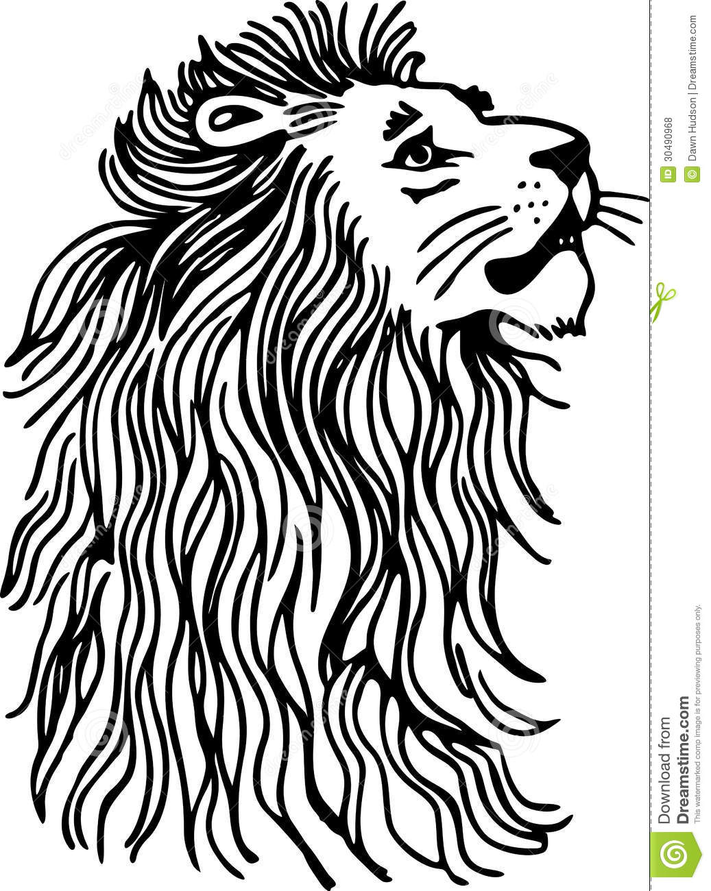 Line Drawing Lion Head : Lion royalty free stock photos image