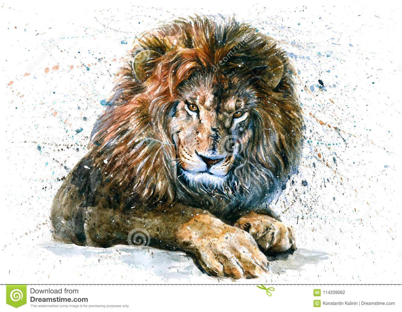 1e0b206a Lion Watercolor Predator Animals Wildlife Painting Stock ...