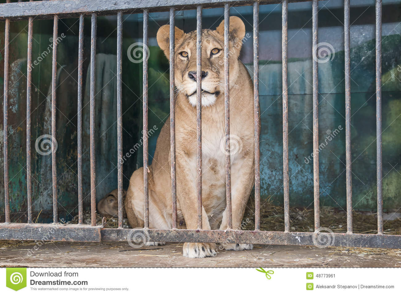zoo or prison Are zoos simply bleak prisons for wild i do kind of feel the zoo is a prison for wild i do not believe that zoos are simply bleak prisons for wild animals.