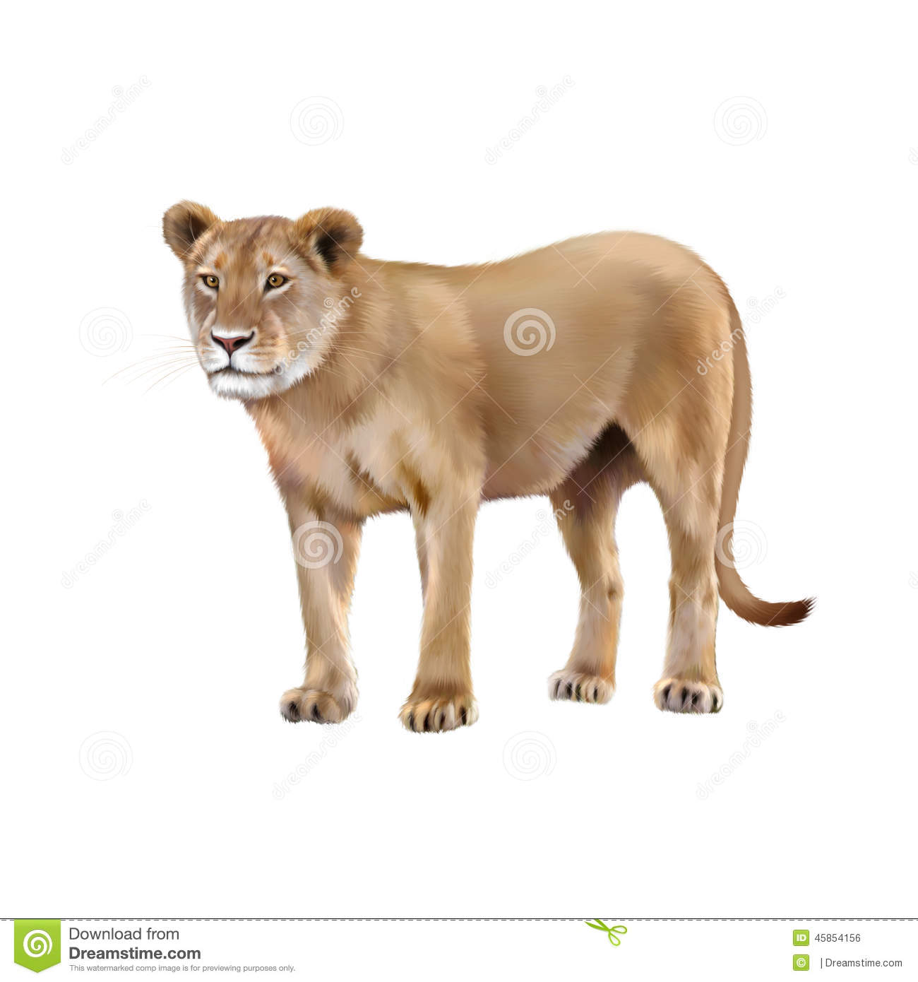 Lioness - Panthera leo in front