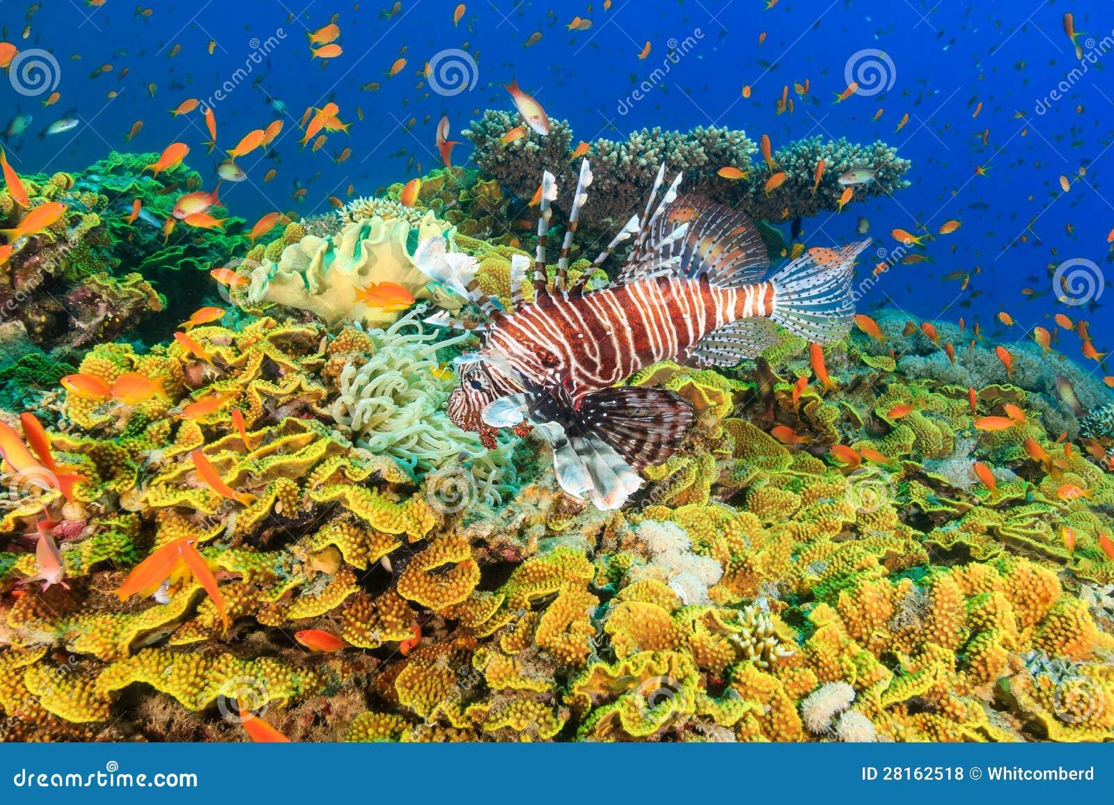 Lionfish et poissons tropicaux sur un récif coralien