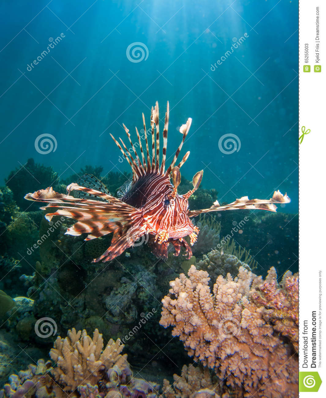 Coral Reef Background: Lionfish Over Coral Reef With Sun Beams Stock Image