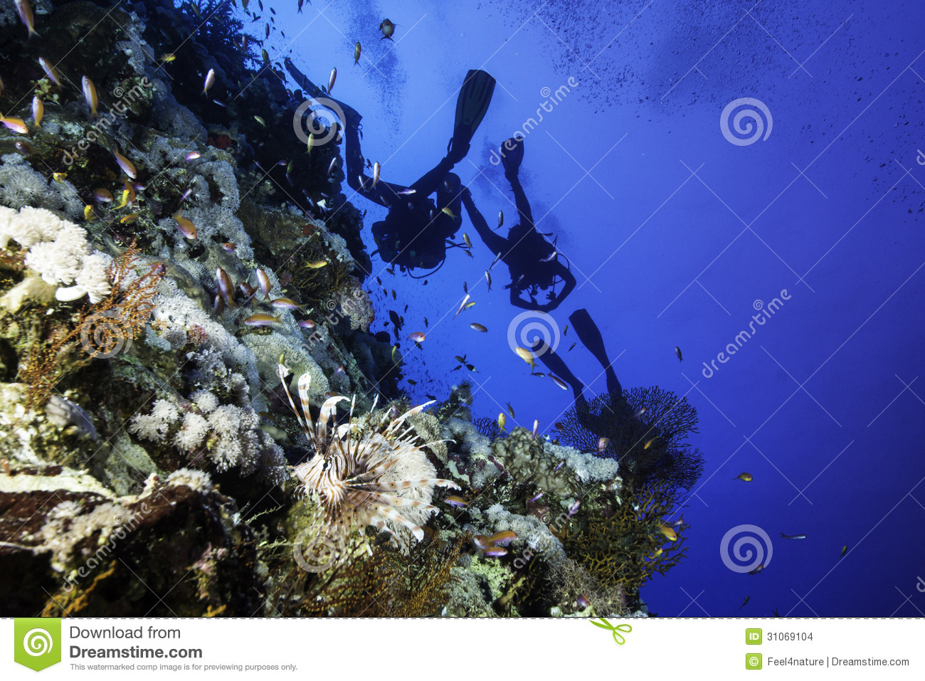 a description of the dangers and rewards of scuba diving Decompression sickness or some other inherent risk of scuba diving  31 description  read this operating manual carefully and to the last.