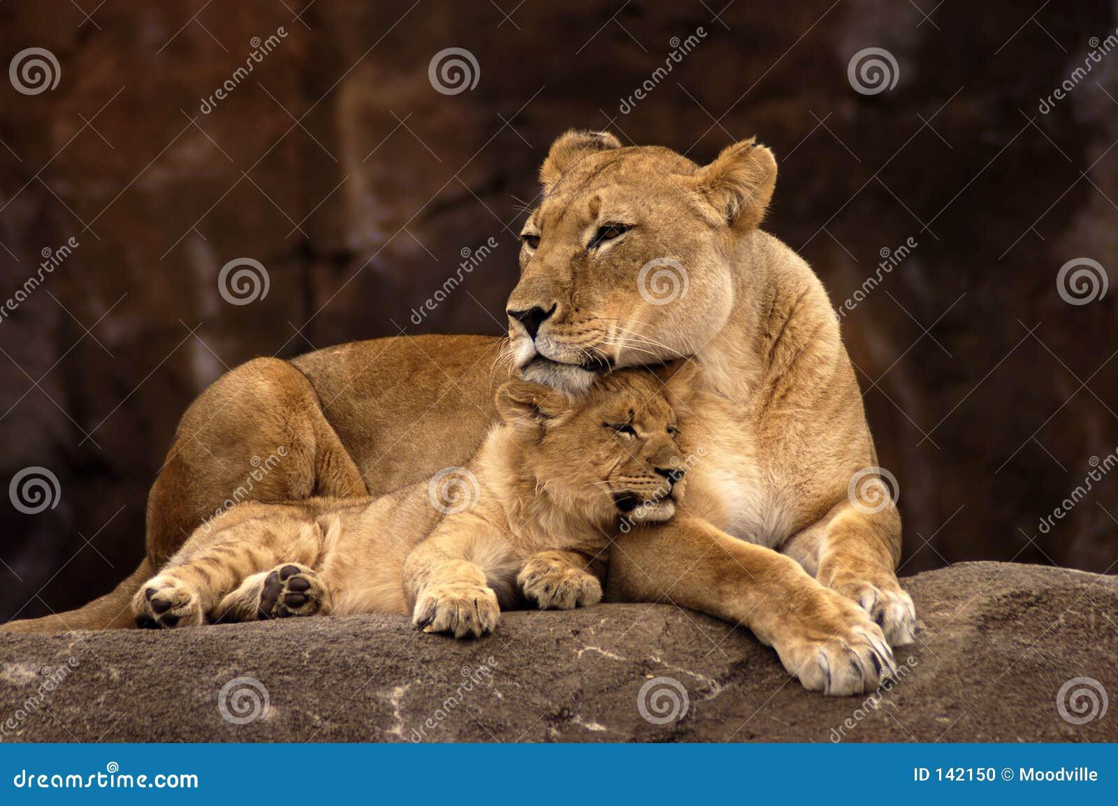 Lionne et Cub