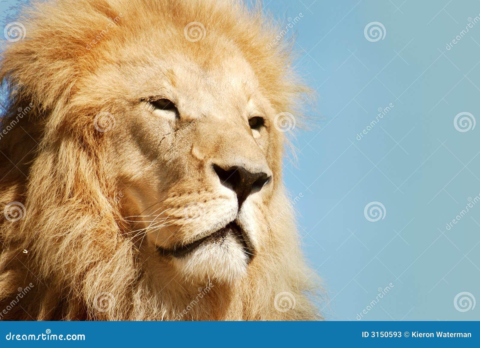Lionstående