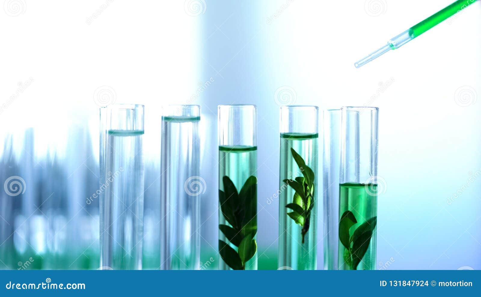 Liquide de vert d égoutture de scientifique dans des tubes de laboratoire, essai de fines herbes de cosmétiques d anti-âge