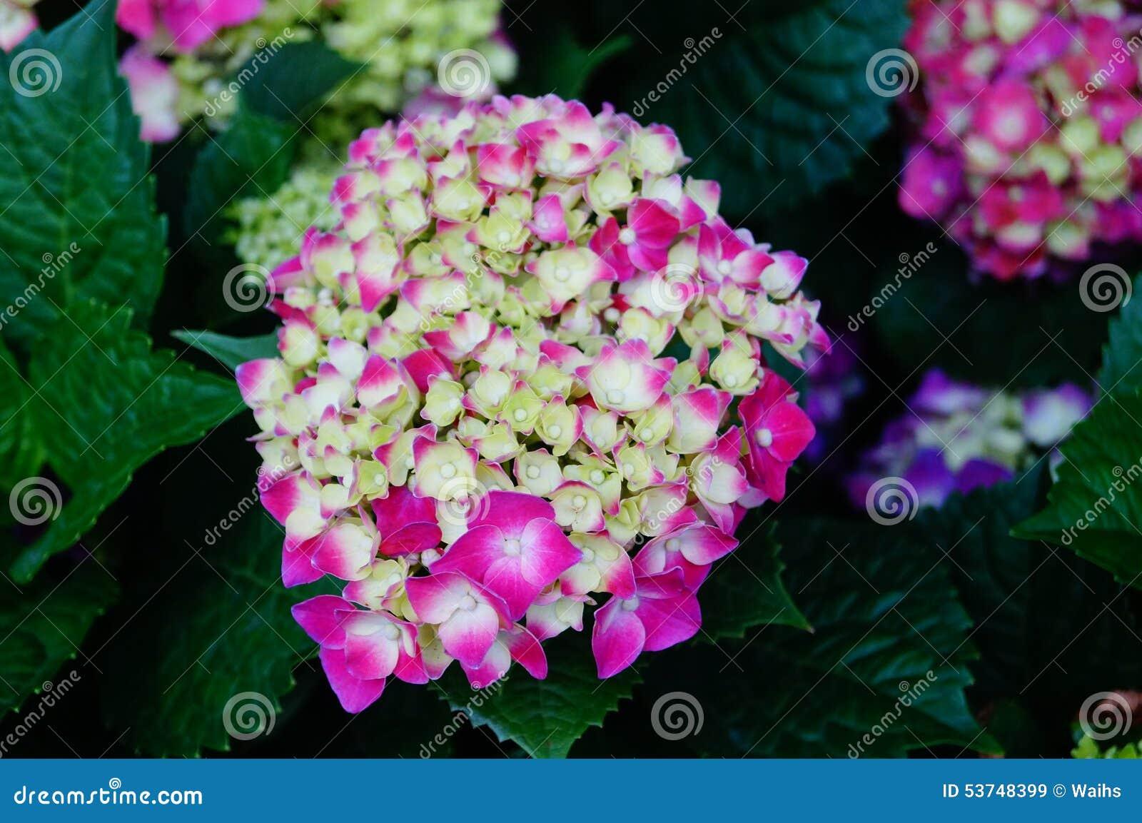 Lis fleur jardin fleuriste vente p tales de fleur for Fleurs vente