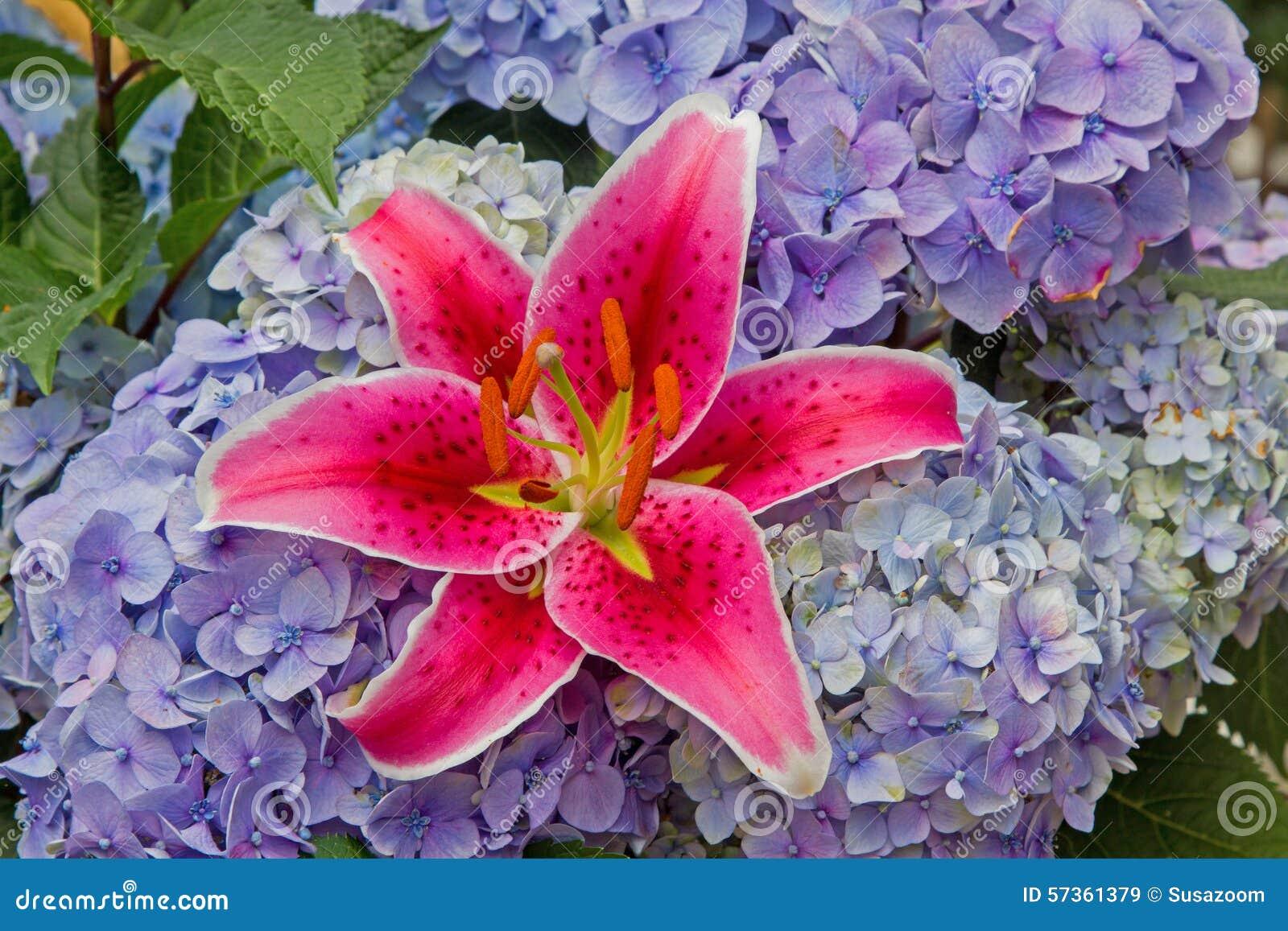 fleuridylle com