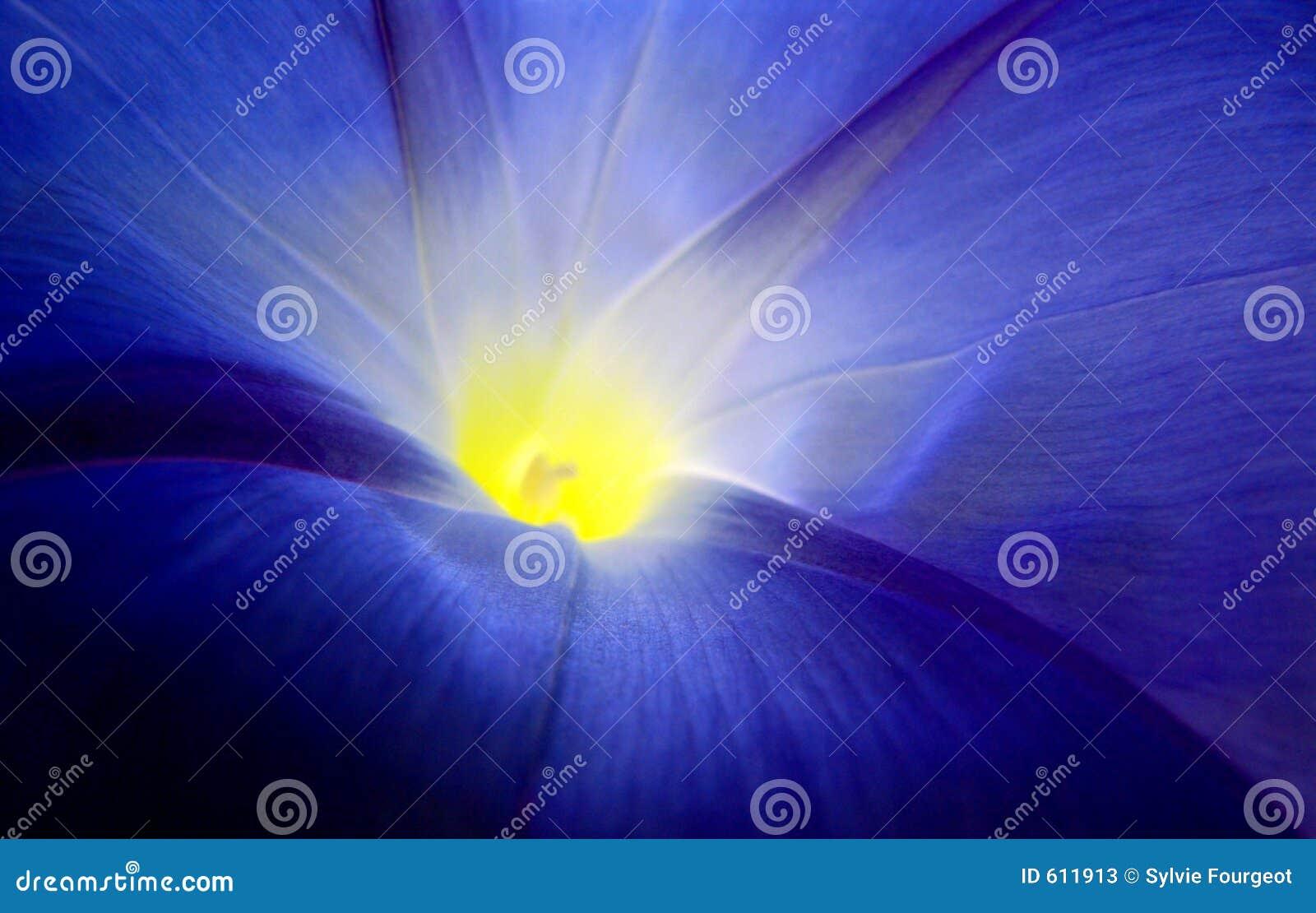 Liseron bleu.