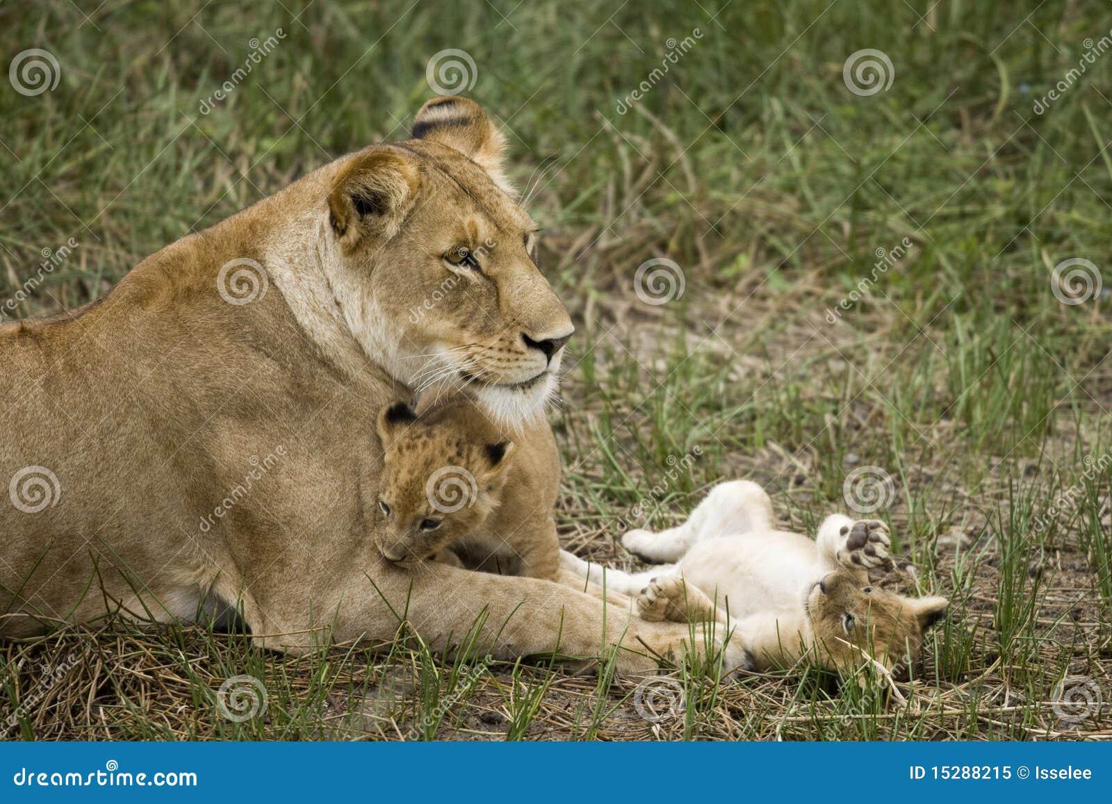Lisiątka lwicy jej serengeti Tanzania