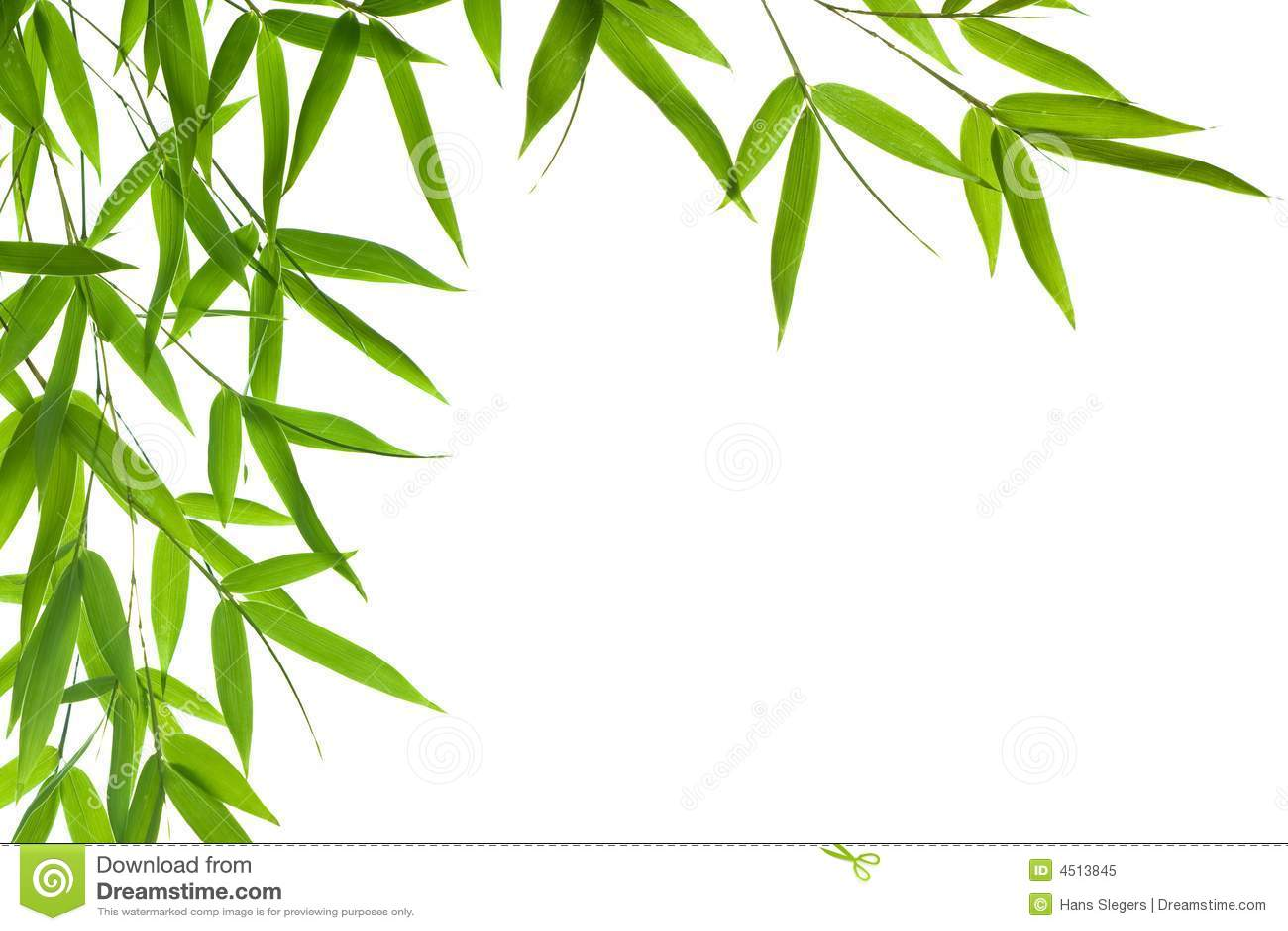 List do bambusów