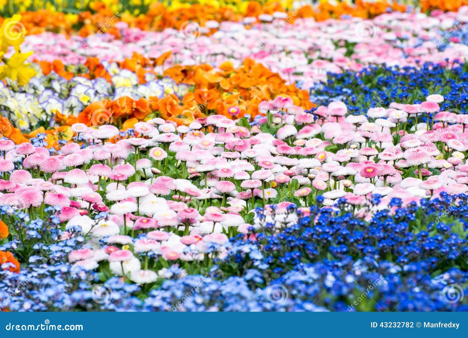 lit de fleur magnifique photo stock - image: 43232782