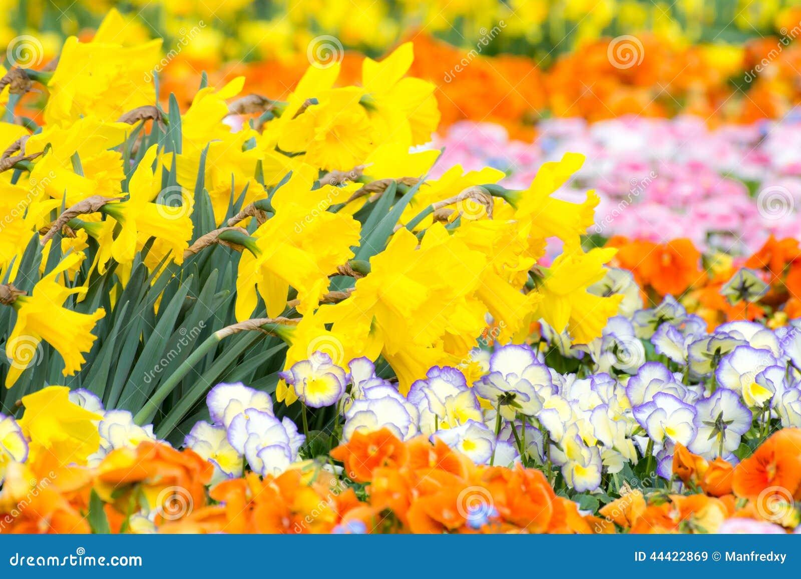lit de fleur magnifique photo stock - image: 44422869