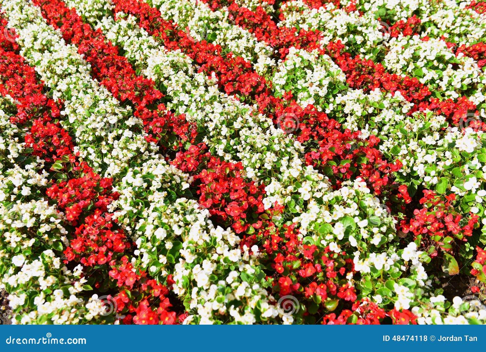 lit de fleur rouge et blanche photo stock image du configuration fleur 48474118. Black Bedroom Furniture Sets. Home Design Ideas