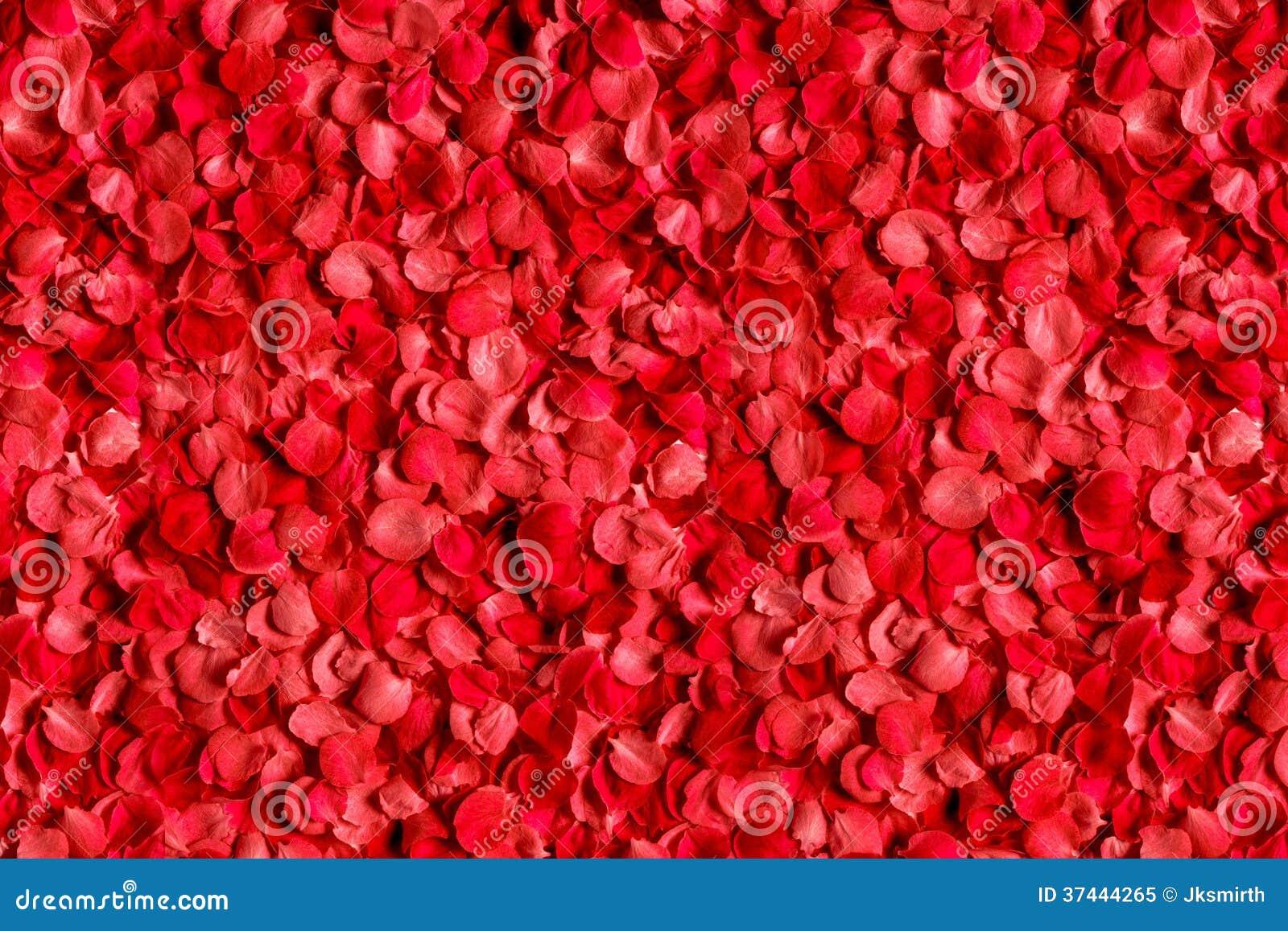 lit des p tales de roses rouges photo libre de droits image 37444265. Black Bedroom Furniture Sets. Home Design Ideas